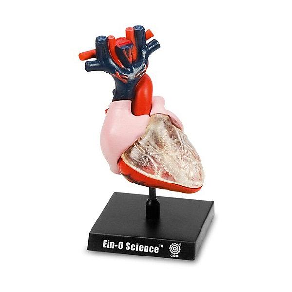 Сердце, Профессор ЭйнАнатомия<br>Характеристики товара:<br><br>• цвет: разноцветный<br>• размер упаковки: 9 x 9 x 10 см<br>• вес: 300 г<br>• комплектация: разборная модель человеческого сердца из 7 частей - правое предсердие, левое предсердие, фрагмент кровеносных сосудов (3 части), легочные вены, легочный ствол, верхняя полая вена, аорта<br>• возраст: от семи лет<br>• упаковка: коробка<br>• страна бренда: Китай<br>• страна изготовитель: Китай<br><br>Изучать науки можно весело! Такой набор станет отличным подарком ребенку - ведь с помощью него можно узнать столько нового и интересного о сердце человека. В набор входят различные части органа, они отлично детализированы. Это отличный способ изучать анатомию!<br>Увлечение такими познавательными наборами помогает детям развивать важные навыки и способности, оно активизирует мышление, формирует усидчивость, логику, мелкую моторику и воображение. Изделие производится из качественных и проверенных материалов, которые безопасны для детей.<br><br>Набор Сердце от бренда Профессор Эйн можно купить в нашем интернет-магазине.<br><br>Ширина мм: 92<br>Глубина мм: 92<br>Высота мм: 105<br>Вес г: 288<br>Возраст от месяцев: 72<br>Возраст до месяцев: 168<br>Пол: Унисекс<br>Возраст: Детский<br>SKU: 5168527