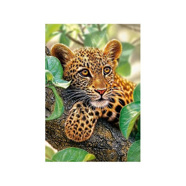 Пазл Ягуар на дереве, 1500 деталей, CastorlandПазлы классические<br>Пазл Ягуар на дереве, 1500 деталей, Castorland,  (Касторленд)<br><br>Характеристики:<br><br>• яркие цвета<br>• количество деталей: 1500<br>• размер упаковки: 35х25х5 см<br>• размер: 68х47<br>• вес: 610 грамм<br>• материал: картон<br><br>Собирание пазлов - очень полезная игра для детей. Это поможет развить логическое мышление, пространственное ориентирование и усидчивость. С помощью набора от Касторленд ребенок сможет собрать красивую картинку с изображением леопарда, отдыхающего на дереве. В набор входит 1500 деталей из плотного картона. С этим набором ребенок обязательно проведет время с пользой!<br><br>Пазл Ягуар на дереве, 1500 деталей, Castorland,  (Касторленд) вы можете купить в нашем интернет-магазине.<br>Ширина мм: 350; Глубина мм: 50; Высота мм: 250; Вес г: 600; Возраст от месяцев: 168; Возраст до месяцев: 2147483647; Пол: Унисекс; Возраст: Детский; SKU: 5244648;