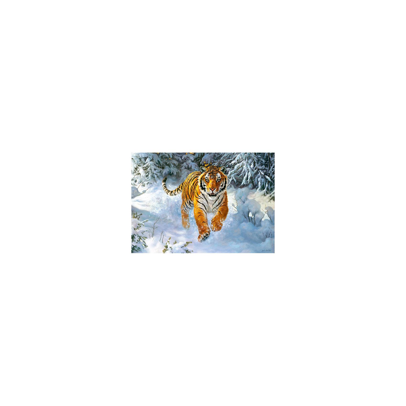 Пазл Амурский тигр, 500 деталей, CastorlandКоличество деталей<br>Пазл Амурский тигр, 500 деталей, Castorland, (Касторленд)<br><br>Характеристики:<br><br>• большая красивая картинка<br>• количество деталей: 500<br>• устойчив к выцветанию<br>• размер пазла: 47х33 см<br>• вес: 100 грамм<br>• размер упаковки: 32х22х4,7 см<br><br>С помощью набора от Касторленд ваш ребенок сможет создать яркую картинку, изображающую Амурского тигра, бегущего по снегу. В набор входят 500 деталей из плотного картона, устойчивого к выцветанию и повреждениям. Детали легко соединяются друг с другом. Собирание пазлов способствует развитию мелкой моторики, логического и пространственного мышления, а также усидчивости. Готовая картинка украсит комнату и, конечно же, порадует ребенка!<br><br>Пазл Амурский тигр, 500 деталей, Castorland, (Касторленд) можно купить в нашем интернет-магазине.<br><br>Ширина мм: 320<br>Глубина мм: 47<br>Высота мм: 220<br>Вес г: 500<br>Возраст от месяцев: 72<br>Возраст до месяцев: 2147483647<br>Пол: Унисекс<br>Возраст: Детский<br>SKU: 5244664