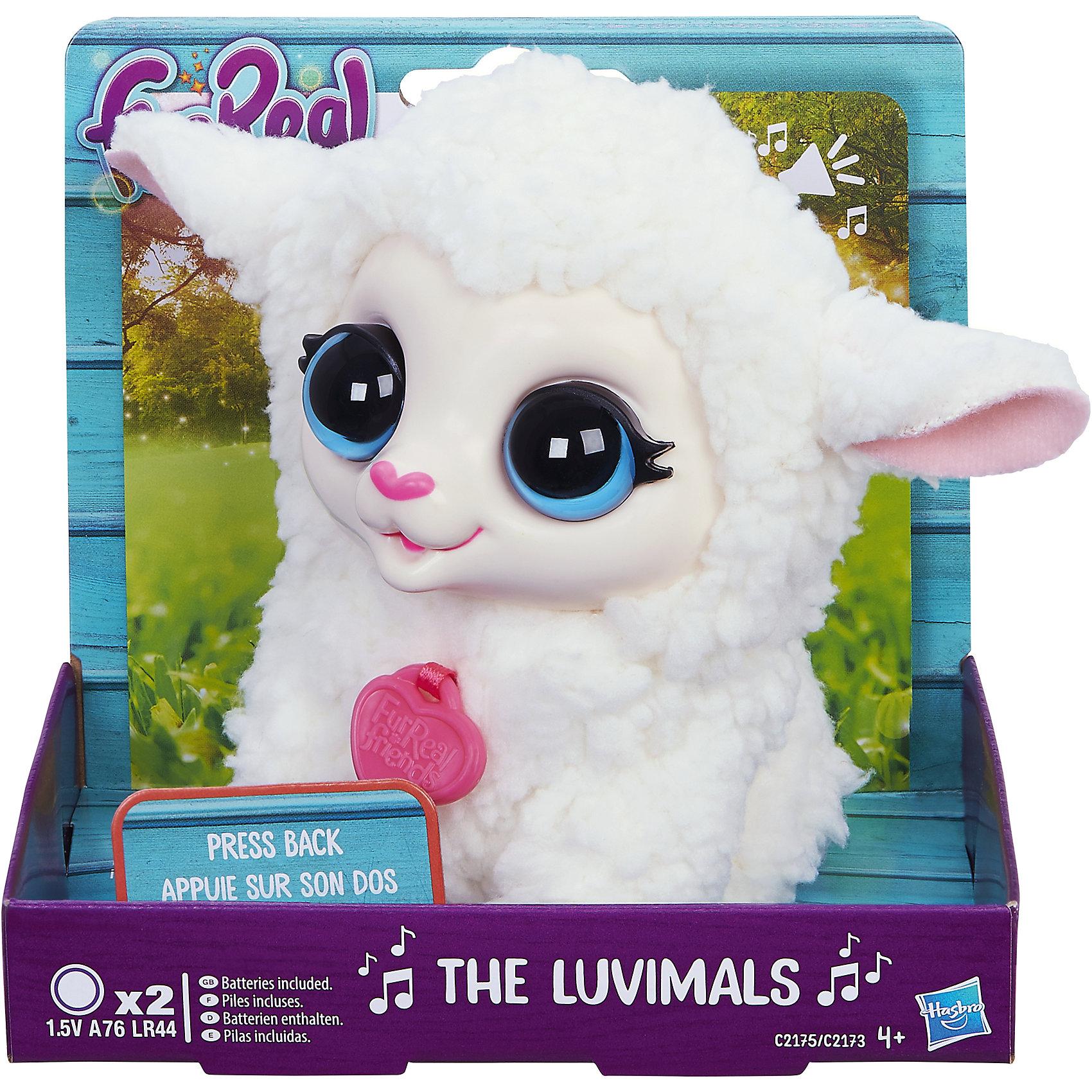 Овечка, FurReal Friends, HasbroИнтерактивные мягкие игрушки<br>Характеристики:<br><br>• Вид игр: сюжетно-ролевые, коллекционирование<br>• Пол: для девочек<br>• Коллекция: Поющие зверята<br>• Материал: текстиль, пластик<br>• Батарейки: 2 х A76 / LR44 (предусмотрены в комплекте)<br>• Высота игрушки: 9-11 см<br>• Поворачивают голову<br>• Умеют петь<br>• Вес в упаковке: 130 г<br>• Размеры упаковки (Д*Ш*В): 11,4*10,2*12,7 см<br>• Упаковка: картонная коробка <br><br>Поющие зверята, Furreal, C2173/C2174 – это коллекция милых пушистых животных от Хасбро, которые умеют петь. Все зверушки выполнены из плюша с ворсом, за счет чего они очень приятные на ощупь, большие выразительные глазки придают игрушкам очень миловидный облик. У каждого зверька на шее имеется пластиковый кулон с брендовой надписью. Игрушки умеют не только петь соло, но и дуэтом. Благодаря компактному размеру, их можно брать с собой в дорогу или в качестве талисмана. Овечка выполнена из плюша белого цвета и у нее большие голубые глаза. Сюжетно-ролевые игры с музыкальными игрушками способствуют развитию художественно-эстетического и музыкального вкуса, а разыгрываемые сюжетно-ролевые игры с домашними любимцами развивают чувство ответственности и заботы. <br><br>Поющих зверят, Furreal, C2173/C2174 можно купить в нашем интернет-магазине.<br><br>Ширина мм: 102<br>Глубина мм: 127<br>Высота мм: 114<br>Вес г: 151<br>Возраст от месяцев: 48<br>Возраст до месяцев: 144<br>Пол: Женский<br>Возраст: Детский<br>SKU: 5363493