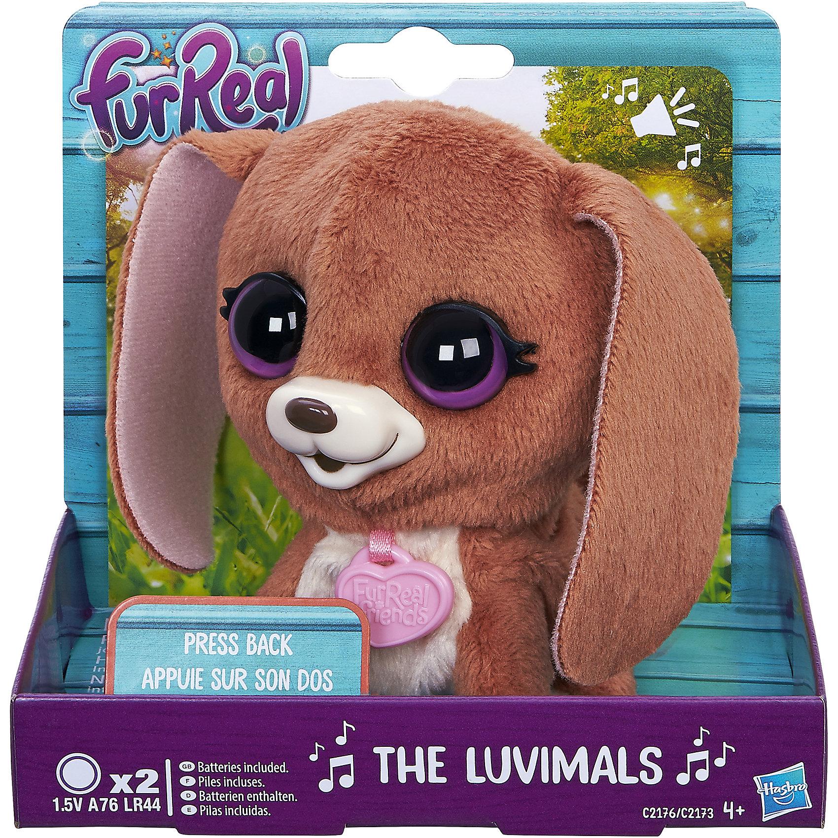 Собачка, FurReal Friends, HasbroМягкие игрушки животные<br>Характеристики:<br><br>• Вид игр: сюжетно-ролевые, коллекционирование<br>• Пол: для девочек<br>• Коллекция: Поющие зверята<br>• Материал: текстиль, пластик<br>• Батарейки: 2 х A76 / LR44 (предусмотрены в комплекте)<br>• Высота игрушки: 9-11 см<br>• Поворачивают голову<br>• Умеют петь<br>• Вес в упаковке: 130 г<br>• Размеры упаковки (Д*Ш*В): 11,4*10,2*12,7 см<br>• Упаковка: картонная коробка <br><br>Поющие зверята, Furreal, C2173/C2174 – это коллекция милых пушистых животных от Хасбро, которые умеют петь. Все зверушки выполнены из плюша с ворсом, за счет чего они очень приятные на ощупь, большие выразительные глазки придают игрушкам очень миловидный облик. У каждого зверька на шее имеется пластиковый кулон с брендовой надписью. Игрушки умеют не только петь соло, но и дуэтом. Благодаря компактному размеру, их можно брать с собой в дорогу или в качестве талисмана. Собачка выполнена из плюша коричневого цвета и у нее большие фиолетовые глаза. Сюжетно-ролевые игры с музыкальными игрушками способствуют развитию художественно-эстетического и музыкального вкуса, а разыгрываемые сюжетно-ролевые игры с домашними любимцами развивают чувство ответственности и заботы. <br><br>Поющих зверят, Furreal, C2173/C2174 можно купить в нашем интернет-магазине.<br><br>Ширина мм: 102<br>Глубина мм: 127<br>Высота мм: 114<br>Вес г: 151<br>Возраст от месяцев: 48<br>Возраст до месяцев: 144<br>Пол: Женский<br>Возраст: Детский<br>SKU: 5363494