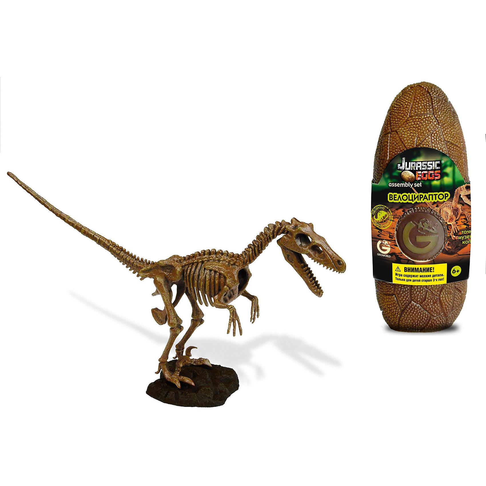 Яйцо динозавра - сборная модель Велоцираптора, GeoworldВелоцираптор — относительно маленький, юркий и хитрый ящер, который обитал в конце мелового периода. Он обладал рядом прогрессивных анатомических черт и очень близок к древним птицам. Некоторые современные теории палеонтологии настаивают, что велоцирапторы были полностью оперены и обладали теплокровностью. Точную музейную копию скелета велоцираптора юный палеонтолог сможет собрать своими руками. Детали предварительно раскрашены, чтобы быть похожими на настоящие кости. Они заключены в стилизованное яйцо. Скелет оснащен подставкой, так что он может стать потом оригинальным сувениром, украшением вашего дома. Длина собранной модели: 28 см.  детали, яйцо, брошюра.<br><br>Ширина мм: 80<br>Глубина мм: 70<br>Высота мм: 200<br>Вес г: 190<br>Возраст от месяцев: 36<br>Возраст до месяцев: 96<br>Пол: Унисекс<br>Возраст: Детский<br>SKU: 5418976
