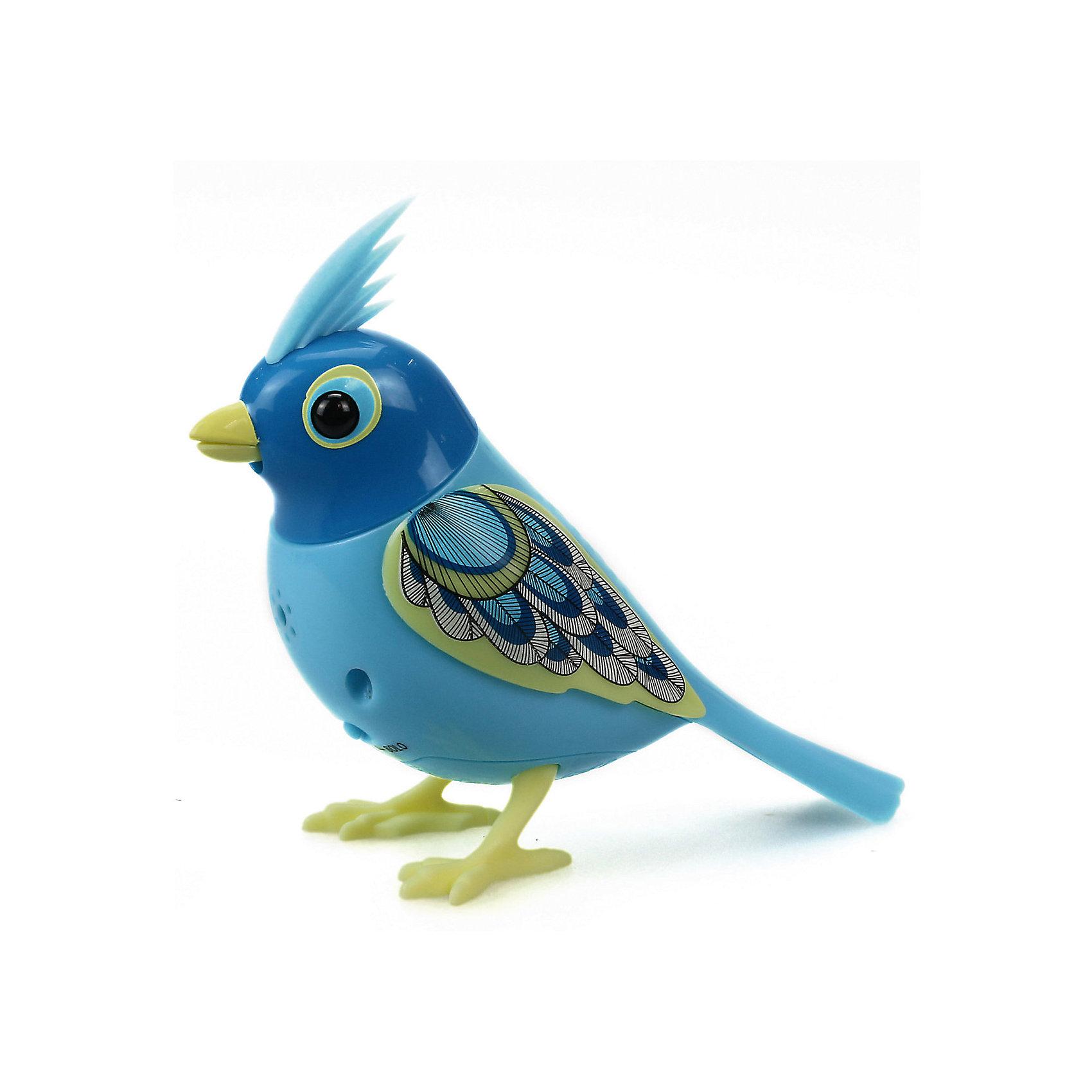 Поющая птичка с кольцом, сине-желтая, DigiBirds