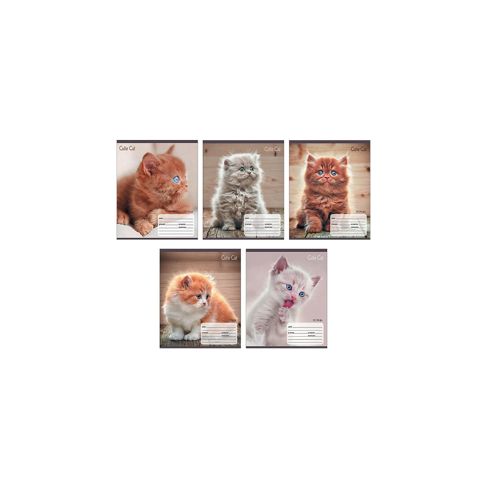 Комплект тетрадей Пушистые котята (10 шт), 18 листов, Канц-ЭксмоБумажная продукция<br>Характеристики комплекта тетрадей Пушистые котята:<br><br>• размеры: 20.2х16.3х3.5 см<br>• количество листов: 18 шт.<br>• разлиновка: линейка<br>• формат: А 5 <br>• комплектация: тетрадь<br>• бумага: офсет, плотностью 60 г/м2.<br>• обложка: мелованный картон , выборочный лак.<br>• бренд: Канц-Эксмо<br>• страна бренда: Россия<br>• страна производителя: Россия<br><br>Комплект тетрадей Пушистые котята от производителя Канц-Эксмо выполнен в формате А5. Количество листов 18, тетради в линейку с полями. Крепление: скрепка. Обложка у изделий плотная - мелованный картон, выборочный лак.<br><br>Комплект тетрадей Пушистые котята от производителя Канц-Эксмо можно купить в нашем интернет-магазине.<br><br>Ширина мм: 210<br>Глубина мм: 165<br>Высота мм: 20<br>Вес г: 52<br>Возраст от месяцев: 72<br>Возраст до месяцев: 2147483647<br>Пол: Женский<br>Возраст: Детский<br>SKU: 5448393