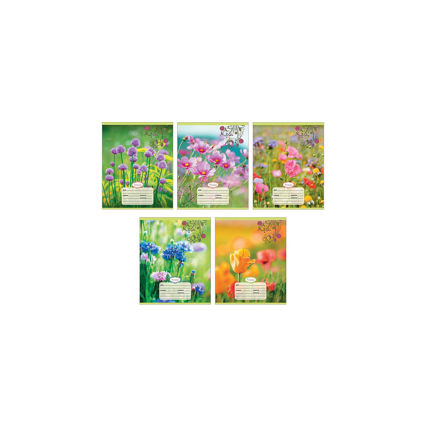 Комплект тетрадей Полевые цветы (10 шт), 24 листа, Канц-ЭксмоБумажная продукция<br>Характеристики комплекта тетрадей Полевые цветы:<br><br>• размеры: 20.2х16.3х3.5 см<br>• количество листов: 24 шт.<br>• разлиновка: клетка<br>• формат: А 5 <br>• комплектация: тетрадь<br>• бумага: офсет, плотностью 60 г/м2.<br>• Бренд: Канц-Эксмо<br>• страна бренда: Россия<br>• страна производителя: Россия<br><br>Комплект тетрадей Полевые цветы от производителя Канц-Эксмо выполнен в формате А5. Количество листов 24, тетради в клетку с полями. Крепление: скрепка. Обложка у изделий плотная - мелованный картон. Тетради будут незамимы помощниками в школе. <br><br>Комплект тетрадей Полевые цветы торговой марки Канц-Эксмо можно купить в нашем интернет-магазине.<br><br>Ширина мм: 202<br>Глубина мм: 163<br>Высота мм: 20<br>Вес г: 67<br>Возраст от месяцев: 72<br>Возраст до месяцев: 2147483647<br>Пол: Женский<br>Возраст: Детский<br>SKU: 5448398