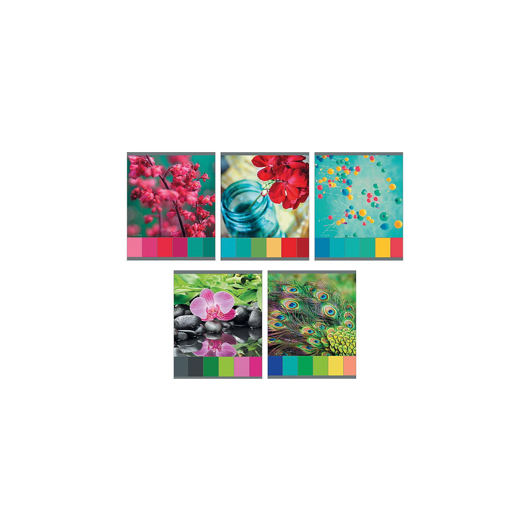 Комплект тетрадей Игра красок (10 шт), 48 листов, Канц-ЭксмоХарактеристики комплекта тетрадей Игра красок:<br><br>• размеры: 20.2х16.3х3.5 см<br>• количество листов: 48 шт.<br>• разлиновка: клетка<br>• формат: А 5 <br>• комплектация: тетрадь<br>• бумага: офсет, плотностью 60 г/м2.<br>• обложка: мелованный картон, выборочный лак.<br>• бренд: Канц-Эксмо<br>• страна бренда: Россия<br>• страна производителя: Россия<br><br>Комплект тетрадей Игра красок от производителя Канц-Эксмо выполнен в формате А5. Количество листов 48, тетради в клетку с полями. Крепление: скрепка. Обложка у изделий плотная - мелованный картон, выборочный лак <br><br>Комплект тетрадей Игра красок от производителя Канц-Эксмо можно купить в нашем интернет-магазине.<br><br>Ширина мм: 202<br>Глубина мм: 165<br>Высота мм: 50<br>Вес г: 103<br>Возраст от месяцев: 72<br>Возраст до месяцев: 2147483647<br>Пол: Женский<br>Возраст: Детский<br>SKU: 5448424