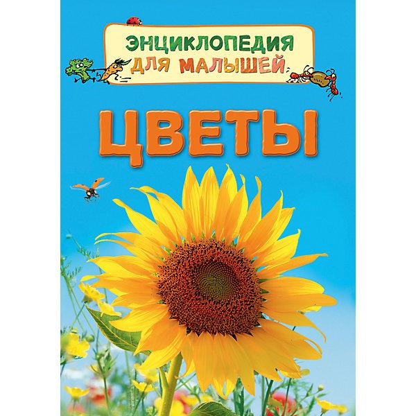 Энциклопедия для малышей ЦветыЭнциклопедии<br>Характеристики:<br>• количество страниц: 32;<br>• иллюстрации: цветные;<br>• переплёт: твёрдый;<br>• формат: 22х16х5х0,7 см;<br>• вес: 178 грамм;<br>• ISBN: 9785353080220.<br><br>Энциклопедия «Цветы» содержит полезную информацию об особенностях жизни цветов. Ребенок узнает о способах опыления, о строении цветов, об уходе за растениями и о многом другом.<br><br>Повествование сопровождается красочными рисунками и фотографиями.<br><br>Изучение энциклопедии поможет развить память и расширить кругозор.<br><br>Энциклопедию для малышей Цветы, Rosman (Росмэн) можно купить в нашем интернет-магазине.<br><br>Ширина мм: 220<br>Глубина мм: 167<br>Высота мм: 70<br>Вес г: 190<br>Возраст от месяцев: 36<br>Возраст до месяцев: 2147483647<br>Пол: Унисекс<br>Возраст: Детский<br>SKU: 5453592