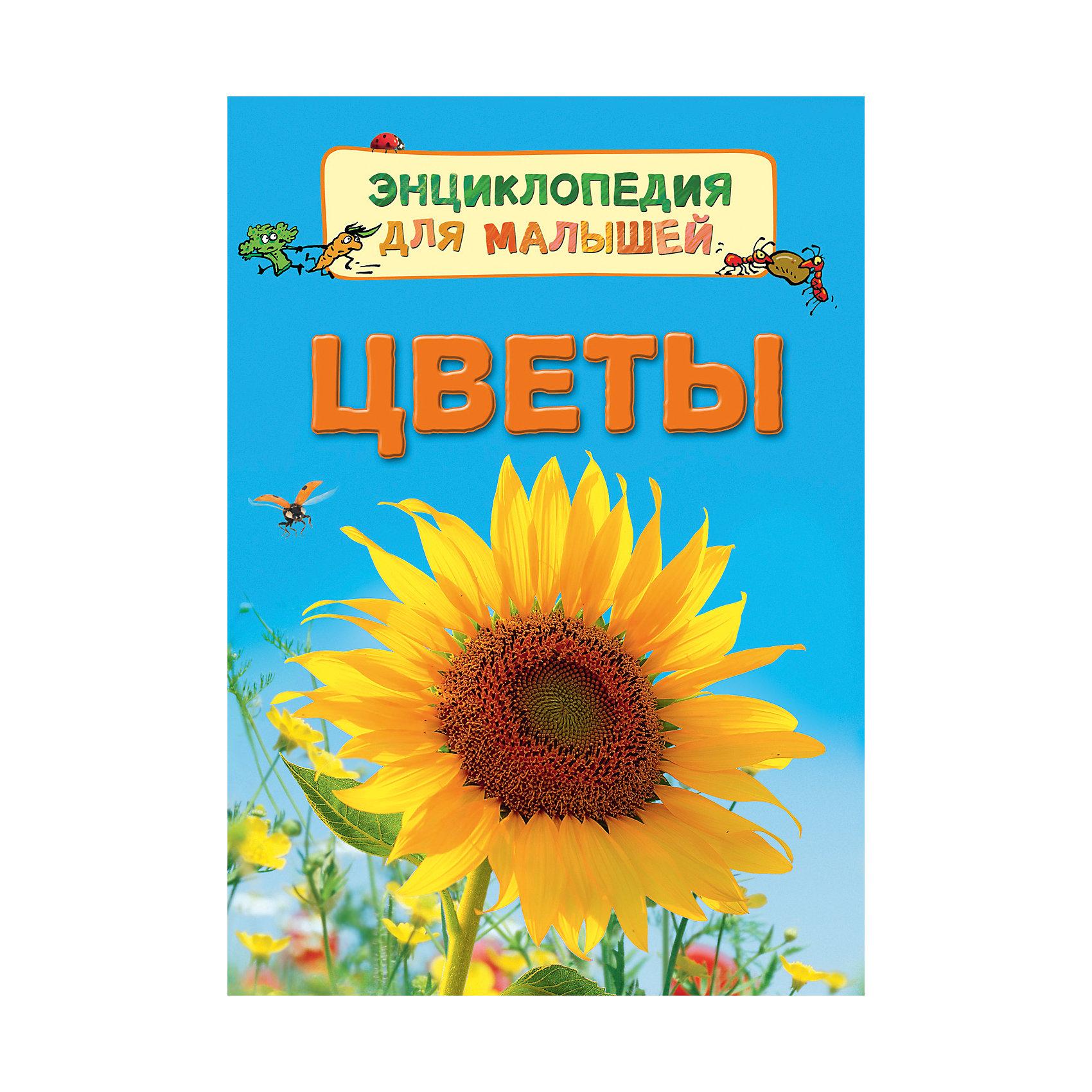 Энциклопедия для малышей ЦветыЭнциклопедии для малышей<br>Характеристики:<br>• количество страниц: 32;<br>• иллюстрации: цветные;<br>• переплёт: твёрдый;<br>• формат: 22х16х5х0,7 см;<br>• вес: 178 грамм;<br>• ISBN: 9785353080220.<br><br>Энциклопедия «Цветы» содержит полезную информацию об особенностях жизни цветов. Ребенок узнает о способах опыления, о строении цветов, об уходе за растениями и о многом другом.<br><br>Повествование сопровождается красочными рисунками и фотографиями.<br><br>Изучение энциклопедии поможет развить память и расширить кругозор.<br><br>Энциклопедию для малышей Цветы, Rosman (Росмэн) можно купить в нашем интернет-магазине.<br><br>Ширина мм: 220<br>Глубина мм: 167<br>Высота мм: 70<br>Вес г: 190<br>Возраст от месяцев: 36<br>Возраст до месяцев: 2147483647<br>Пол: Унисекс<br>Возраст: Детский<br>SKU: 5453592