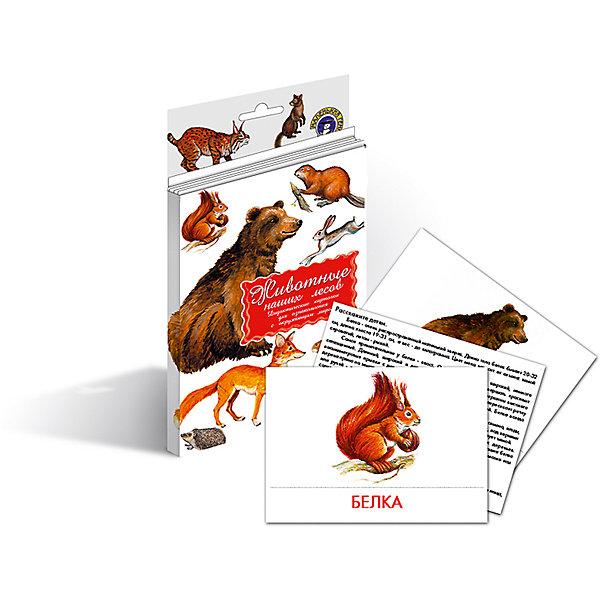 Дидактические карточки Животные наших лесов, Маленький генийОбучающие карточки<br>Дидактические карточки Животные наших лесов, Маленький гений.<br><br>Характеристики:<br><br>• Художник: Подколзин Евгений<br>• Количество карточек: 16<br>• Размер карточек: 25х15 см.<br>• Материал: картон<br>• Упаковка: картонный блистер с европодвесом<br>• Размер упаковки: 25,2х15,1х1 см.<br><br>Дидактические карточки познакомят малыша с некоторыми самыми известными животными, обитающими в лесах средней полосы России: медведем, соболем, белкой, оленем, ежом, лисой, ондатрой, бобром, волком, куницей, кабаном, рысью, барсуком, зайцем, лосем, росомахой. Всего в набор входит 16 карточек. На каждой карточке дано крупное, яркое и реалистичное изображение животного, а на обратной стороне дано его описание: внешний вид, места обитания, повадки, интересные факты и загадка. <br><br>Совсем маленькому ребенку можно просто показывать карточки и называть животное. А затем попросить малыша найти карточку с тем или иным зверем и назвать его. Можно сортировать животных, например на хищных, травоядных и всеядных, или больших, средних и маленьких. Если ребенок учится читать, можно отрезать названия и, перемешав, предложить ребенку подобрать картинки к названиям. <br><br>С карточками можно организовать и множество игр на развитие внимания, логического мышления и памяти. Игра «Четвертый лишний»: из четырех карточек, одна из которых отличается от трех других, ребенок должен выбрать лишнюю и объяснить свой выбор. Можно по очереди с ребенком отвечать на вопрос «Какой?» относительно каждой карточки, стараясь дать больше ответов. <br><br>Разглядывая карточки, играя с ними, ваш малыш не только обогатит свой багаж знаний об окружающем мире, но и научится составлять предложения, беседовать по картинкам, классифицировать и систематизировать предметы. Карточки рекомендуются родителям, логопедами, психологами, воспитателями детских садов, учителями начальных классов для познавательных игр с детьми и занятий по метод
