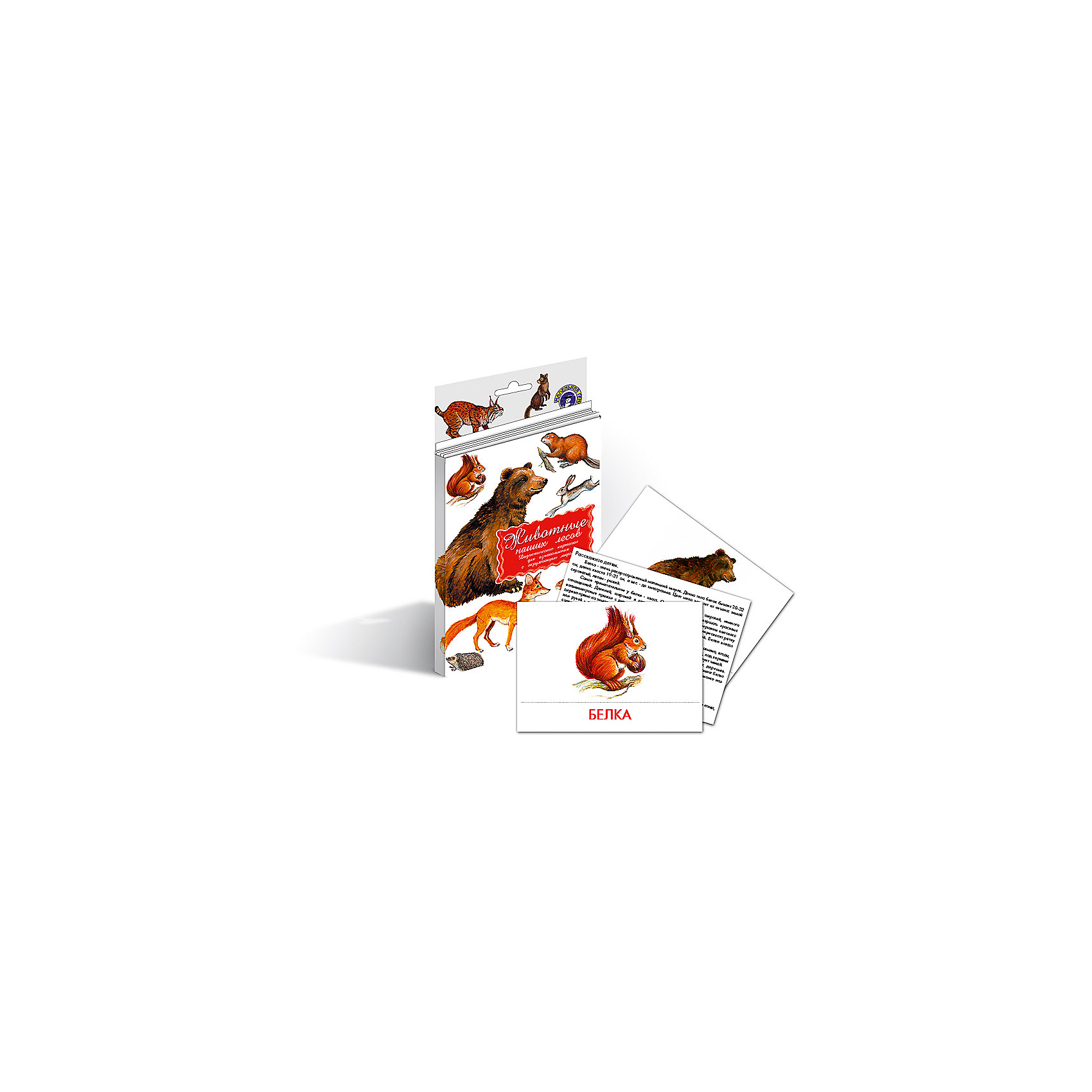 Дидактические карточки Животные наших лесов, Маленький генийДидактические карточки Животные наших лесов, Маленький гений.<br><br>Характеристики:<br><br>• Художник: Подколзин Евгений<br>• Количество карточек: 16<br>• Размер карточек: 25х15 см.<br>• Материал: картон<br>• Упаковка: картонный блистер с европодвесом<br>• Размер упаковки: 25,2х15,1х1 см.<br><br>Дидактические карточки познакомят малыша с некоторыми самыми известными животными, обитающими в лесах средней полосы России: медведем, соболем, белкой, оленем, ежом, лисой, ондатрой, бобром, волком, куницей, кабаном, рысью, барсуком, зайцем, лосем, росомахой. Всего в набор входит 16 карточек. На каждой карточке дано крупное, яркое и реалистичное изображение животного, а на обратной стороне дано его описание: внешний вид, места обитания, повадки, интересные факты и загадка. <br><br>Совсем маленькому ребенку можно просто показывать карточки и называть животное. А затем попросить малыша найти карточку с тем или иным зверем и назвать его. Можно сортировать животных, например на хищных, травоядных и всеядных, или больших, средних и маленьких. Если ребенок учится читать, можно отрезать названия и, перемешав, предложить ребенку подобрать картинки к названиям. <br><br>С карточками можно организовать и множество игр на развитие внимания, логического мышления и памяти. Игра «Четвертый лишний»: из четырех карточек, одна из которых отличается от трех других, ребенок должен выбрать лишнюю и объяснить свой выбор. Можно по очереди с ребенком отвечать на вопрос «Какой?» относительно каждой карточки, стараясь дать больше ответов. <br><br>Разглядывая карточки, играя с ними, ваш малыш не только обогатит свой багаж знаний об окружающем мире, но и научится составлять предложения, беседовать по картинкам, классифицировать и систематизировать предметы. Карточки рекомендуются родителям, логопедами, психологами, воспитателями детских садов, учителями начальных классов для познавательных игр с детьми и занятий по методике Глена Домана.<br><