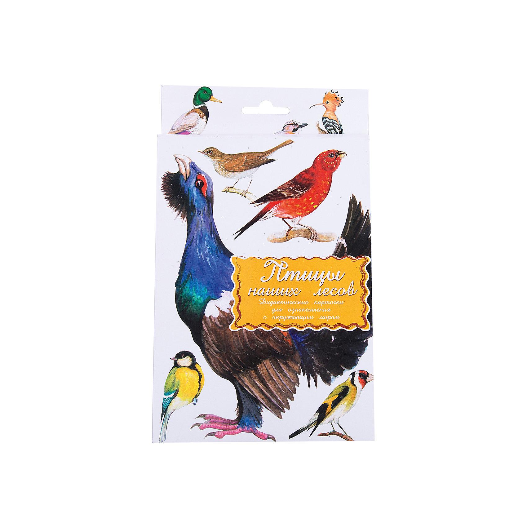 Дидактические карточки Птицы наших лесов, Маленький генийОбучающие карточки<br>Дидактические карточки Птицы наших лесов, Маленький гений.<br><br>Характеристики:<br><br>• Художник: Подколзин Евгений<br>• Количество карточек: 16<br>• Размер карточек: 25х15 см.<br>• Материал: картон<br>• Упаковка: картонный блистер с европодвесом<br>• Размер упаковки: 25,2х15,1х1 см.<br><br>Дидактические карточки с крупными яркими картинками познакомят малыша с некоторыми самыми известными птицами, обитающими в лесах средней полосы России: иволгой, совой, дятлом, удодом, кукушкой, зимородком, глухарем, вороном, горихвосткой, клестом, сойкой, соловьем, поползнем, уткой, ястребом, щеглом. Всего в набор входит 16 карточек. На одной стороне каждой карточки изображена птица, а на обратной стороне дано ее описание: внешний вид, места обитания, повадки, интересные факты. <br><br>Совсем маленькому ребенку можно просто показывать карточки и называть птиц. Когда он запомнит их можно просить его найти карточку с той или иной птицей или назвать птицу, которую Вы ему показываете. Можно сортировать птиц, например на хищных, насекомоядных и зерноядных, или больших, средних и маленьких и т.д. Если ребенок учится читать, можно отрезать названия и, перемешав, предложить ребенку подобрать картинки к названиям. <br><br>С карточками можно организовать и множество игр на развитие внимания, логического мышления и памяти. Игра «Четвертый лишний»: из четырех карточек, одна из которых отличается от трех других, ребенок должен выбрать лишнюю и объяснить свой выбор. Можно по очереди с ребенком отвечать на вопрос «Какой?» относительно каждой карточки, стараясь дать больше ответов. <br><br>Разглядывая карточки, играя с ними, ваш малыш не только обогатит свой багаж знаний об окружающем мире, но и научится составлять предложения, беседовать по картинкам, классифицировать и систематизировать предметы. Карточки рекомендуются родителям, логопедами, психологами, воспитателями детских садов, учителями начальных классов дл