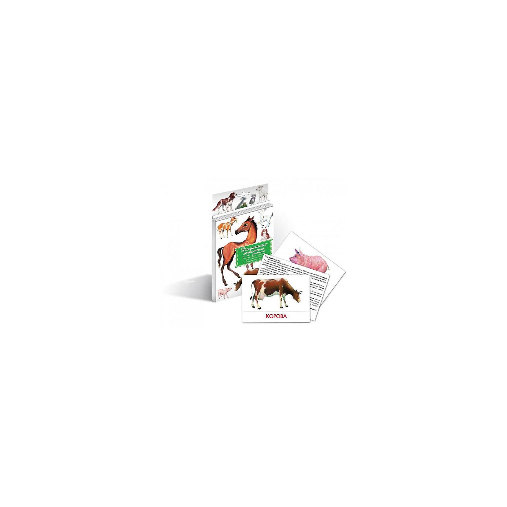 Дидактические карточки Домашние животные, Маленький генийОбучающие карточки<br>Дидактические карточки Домашние животные, Маленький гений.<br><br>Характеристики:<br><br>• Художник: Подколзин Евгений<br>• Количество карточек: 16<br>• Размер карточек: 25х15 см.<br>• Материал: картон<br>• Упаковка: картонный блистер с европодвесом<br>• Размер упаковки: 25,2х15,1х1 см.<br><br>Дидактические карточки с крупными яркими картинками познакомят малыша с домашними животными их детенышами. Всего в набор входит 16 карточек. На одной стороне каждой карточки изображено животное, а на обратной стороне дано его описание: внешний вид, места обитания, повадки, интересные факты. <br><br>Для начала ознакомьте малыша с названиями домашних животных и тем, как они говорят. Если ребенок еще совсем маленький ему легче будет повторять звуки, издаваемые животными, а не их названия. Когда он запомнит их можно просить его найти карточку с тем или иным животным или назвать животное, которое Вы ему показываете. Можно сыграть с ним в игру «Помоги мамам найти малышей» или «Малышам найти мам». <br><br>Если ребенок учится читать, можно отрезать названия и, перемешав, предложить ребенку подобрать картинки к названиям. С карточками можно организовать и множество игр на развитие внимания, логического мышления и памяти. Игра «Четвертый лишний»: из четырех карточек, одна из которых отличается от трех других, ребенок должен выбрать лишнюю и объяснить свой выбор. Можно по очереди с ребенком отвечать на вопрос «Какой?» относительно каждой карточки, стараясь дать больше ответов. <br><br>Разглядывая карточки, играя с ними, ваш малыш не только обогатит свой багаж знаний об окружающем мире, но и научится составлять предложения, беседовать по картинкам, классифицировать и систематизировать предметы. Карточки рекомендуются родителям, логопедами, психологами, воспитателями детских садов, учителями начальных классов для познавательных игр с детьми и занятий по методике Глена Домана.<br><br>Дидактические карточки Домашн