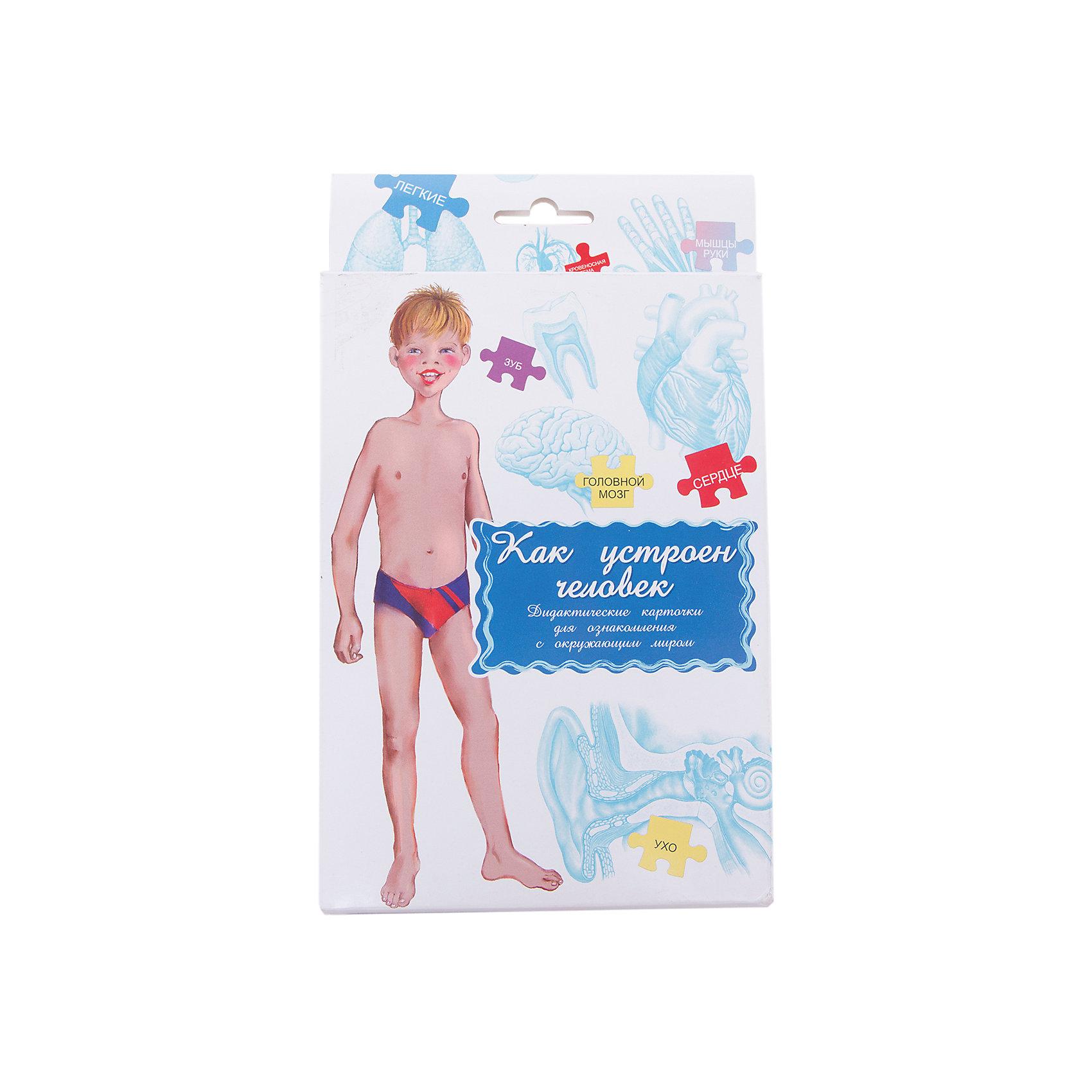 Дидактические карточки Как устроен человек, Маленький генийОбучающие карточки<br>Дидактические карточки Как устроен человек, Маленький гений.<br><br>Характеристики:<br><br>• Количество карточек: 16<br>• Размер карточек: 25х15 см.<br>• Материал: картон<br>• Упаковка: картонный блистер с европодвесом<br>• Размер упаковки: 25,2х15,1х1 см.<br><br>Дидактические карточки с крупными яркими картинками познакомят малыша с внешним и внутренним строением человеческого тела. На карточках изображены: внешнее строение, внутреннее строение, мышечная система, кровеносная система, дыхательная система, выделительная система, пищеварительная система, нервная система, сердце, мозг, язык, мышцы кисти, желудок, скелет, череп и зуб. Всего в набор входит 16 карточек. <br><br>На одной стороне каждой карточки изображен орган или система органов, а на обратной стороне дано их описание: строение, функции, интересные факты, правила, которые надо соблюдать, чтобы сохранить их здоровыми. Совсем маленькому ребенку можно показать карточку с внешним строением человека и искать вместе с ним у самого ребенка разные части тела. <br><br>Старшим детям читайте описания на обороте. Попробуйте составить описание органа или системы, не называя его, а ребенок пусть угадывает, о чем идет речь. Если ребенок учится читать, можно отрезать названия и, перемешав, предложить ребенку подобрать картинки к названиям. <br><br>С карточками можно организовать и множество игр на развитие внимания, логического мышления и памяти. Игра «Четвертый лишний»: из четырех карточек, одна из которых отличается от трех других, ребенок должен выбрать лишнюю и объяснить свой выбор. Выложите несколько карточек, затем поменяйте что-нибудь. Ребенок должен определить, что изменилось.<br><br>Разглядывая карточки, играя с ними, ваш малыш не только обогатит свой багаж знаний об окружающем мире, но и научится составлять предложения, беседовать по картинкам, классифицировать и систематизировать предметы. Карточки рекомендуются родителям, воспита