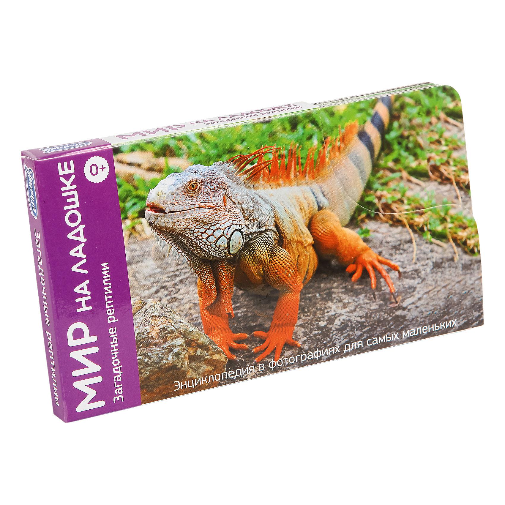 Мир на ладошке Загадочные рептилии (выпуск 5)Методики раннего развития<br>Характеристики:<br><br>• Вид игр: обучающие, развивающие<br>• Серия: Развивающие карточки<br>• Материал: картон<br>• Комплектация: 24 двухсторонние карточки<br>• Размеры карточек (В*Ш): 18*10 см<br>• Тип упаковки: картонная коробка<br>• Размеры упаковки (Д*Ш*В): 10*18*15 см<br>• Вес в упаковке: 190 г<br><br>Энциклопедия Мир на ладошке: Загадочные рептилии, Часть 5.5 состоит из 24 двухсторонних карточек с изображением рептилий в естественной среде обитания. С обратной стороны на карточках имеется общая информация о них. Карточки имеют яркий дизайн и представляют собой фотографии рептилий, выполненных в естественной среде обитания. <br><br>Энциклопедию Мир на ладошке: Загадочные рептилии, Часть 5.5 можно купить в нашем интернет-магазине.<br><br>Ширина мм: 100<br>Глубина мм: 180<br>Высота мм: 150<br>Вес г: 190<br>Возраст от месяцев: 36<br>Возраст до месяцев: 2147483647<br>Пол: Унисекс<br>Возраст: Детский<br>SKU: 5523171