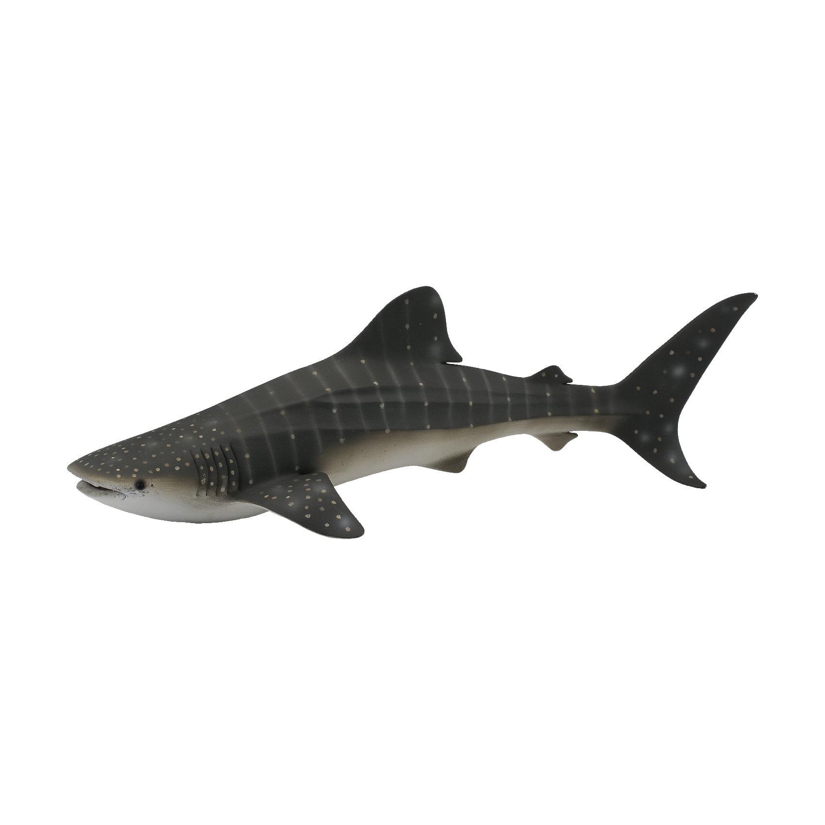 Китовая акула, XL, CollectaМир животных<br><br><br>Ширина мм: 200<br>Глубина мм: 10<br>Высота мм: 10<br>Вес г: 40<br>Возраст от месяцев: 36<br>Возраст до месяцев: 192<br>Пол: Унисекс<br>Возраст: Детский<br>SKU: 5534521