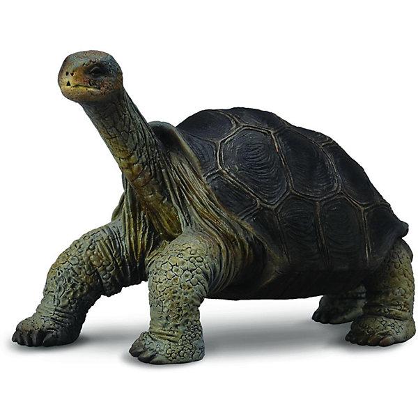 Абингдонская слоновая черепаха, CollectaМир животных<br><br><br>Ширина мм: 200<br>Глубина мм: 10<br>Высота мм: 10<br>Вес г: 16<br>Возраст от месяцев: 36<br>Возраст до месяцев: 192<br>Пол: Унисекс<br>Возраст: Детский<br>SKU: 5534534