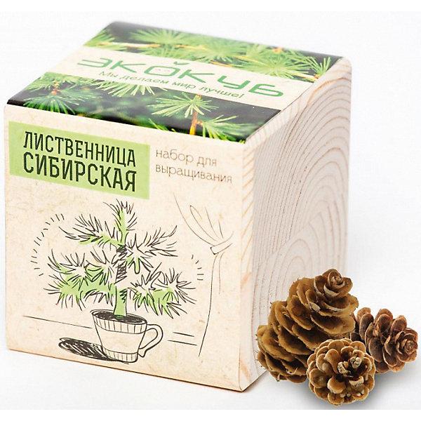 Набор для выращивания Лиственница, ЭкокубВыращивание растений<br>Наборы Эко Куб - удивительная вещь, которая станет необычным украшением дома или оригинальным подарком. С виду это лишь маленьникй деревянный кубик, но внутри него спрятано настоящее деревце, которое вы самостоятельно сможете прорастить из семечка и собрать урожай. Это увлекательное и полезное занятие для всей семьи, которое поможет родителям стать ближе к своим детям. Набор учит ребенка заботиться о живых существах, воспитывает чувство ответственности.<br>Ширина мм: 80; Глубина мм: 80; Высота мм: 80; Вес г: 199; Возраст от месяцев: 60; Возраст до месяцев: 2147483647; Пол: Унисекс; Возраст: Детский; SKU: 5596048;