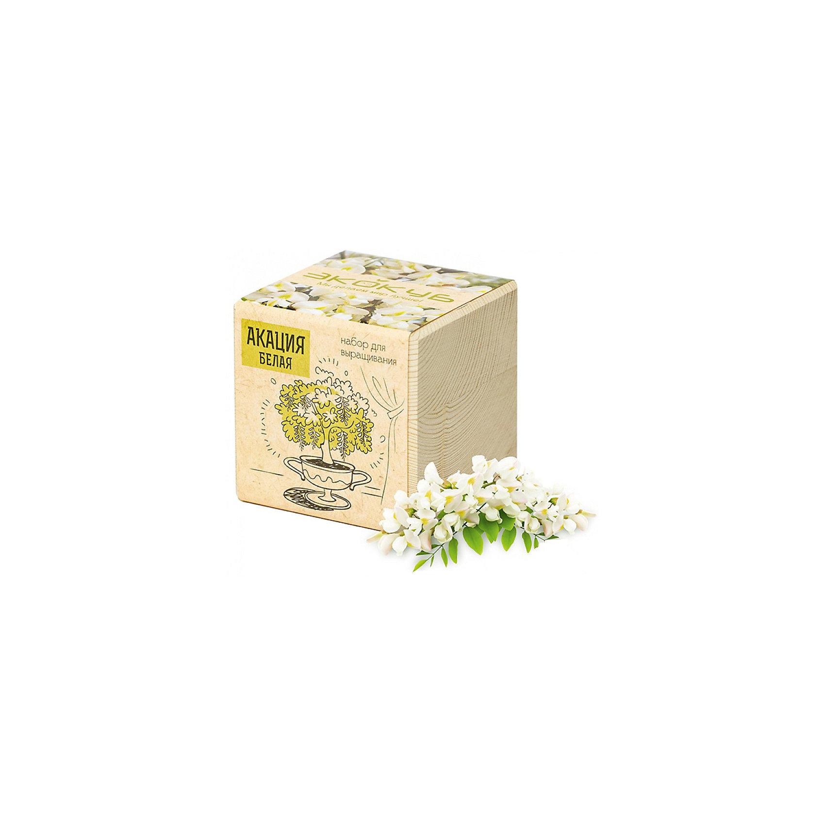 Набор для выращивания Акация, ЭкокубНаборы для выращивания растений<br>Наборы Эко Куб - удивительная вещь, которая станет необычным украшением дома или оригинальным подарком. С виду это лишь маленьникй деревянный кубик, но внутри него спрятано настоящее деревце, которое вы самостоятельно сможете прорастить из семечка и собрать урожай. Это увлекательное и полезное занятие для всей семьи, которое поможет родителям стать ближе к своим детям. Набор учит ребенка заботиться о живых существах, воспитывает чувство ответственности.<br><br>Ширина мм: 80<br>Глубина мм: 80<br>Высота мм: 80<br>Вес г: 199<br>Возраст от месяцев: 60<br>Возраст до месяцев: 2147483647<br>Пол: Унисекс<br>Возраст: Детский<br>SKU: 5596050