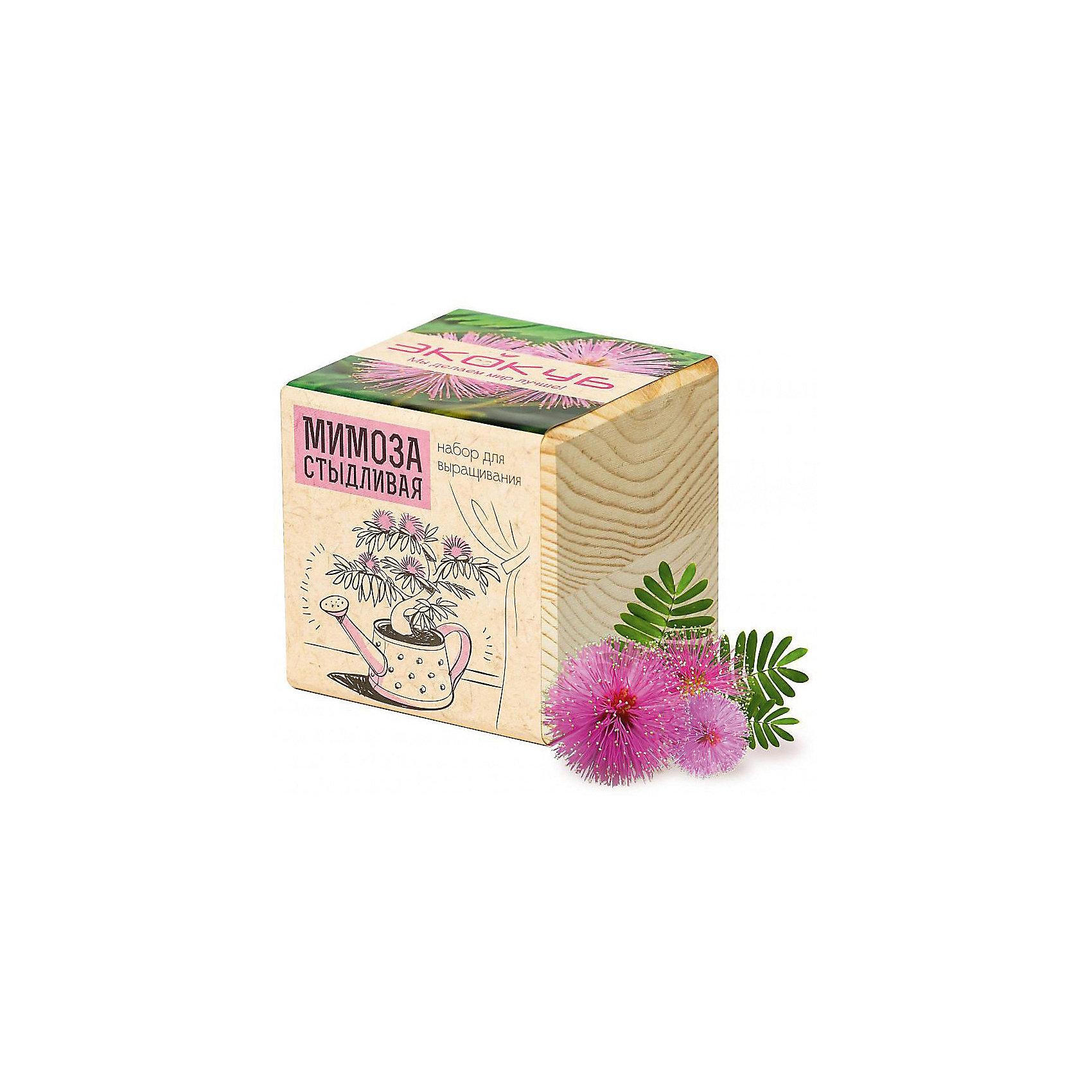 Набор для выращивания Мимоза, ЭкокубНаборы для выращивания растений<br>Наборы Эко Куб - удивительная вещь, которая станет необычным украшением дома или оригинальным подарком. С виду это лишь маленьникй деревянный кубик, но внутри него спрятано настоящее деревце, которое вы самостоятельно сможете прорастить из семечка и собрать урожай. Это увлекательное и полезное занятие для всей семьи, которое поможет родителям стать ближе к своим детям. Набор учит ребенка заботиться о живых существах, воспитывает чувство ответственности.<br><br>Ширина мм: 80<br>Глубина мм: 80<br>Высота мм: 80<br>Вес г: 185<br>Возраст от месяцев: 60<br>Возраст до месяцев: 2147483647<br>Пол: Унисекс<br>Возраст: Детский<br>SKU: 5596054
