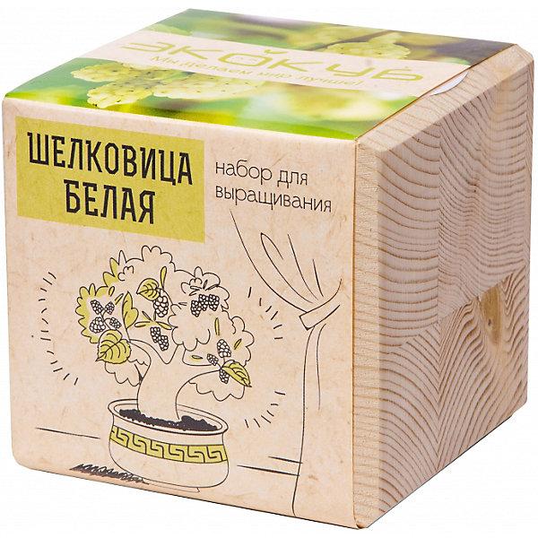 Набор для выращивания Шелковица Белая, ЭкокубВыращивание растений<br>Наборы Эко Куб - удивительная вещь, которая станет необычным украшением дома или оригинальным подарком. С виду это лишь маленьникй деревянный кубик, но внутри него спрятано настоящее деревце, которое вы самостоятельно сможете прорастить из семечка и собрать урожай. Это увлекательное и полезное занятие для всей семьи, которое поможет родителям стать ближе к своим детям. Набор учит ребенка заботиться о живых существах, воспитывает чувство ответственности.<br>Ширина мм: 80; Глубина мм: 80; Высота мм: 80; Вес г: 204; Возраст от месяцев: 60; Возраст до месяцев: 2147483647; Пол: Унисекс; Возраст: Детский; SKU: 5596056;