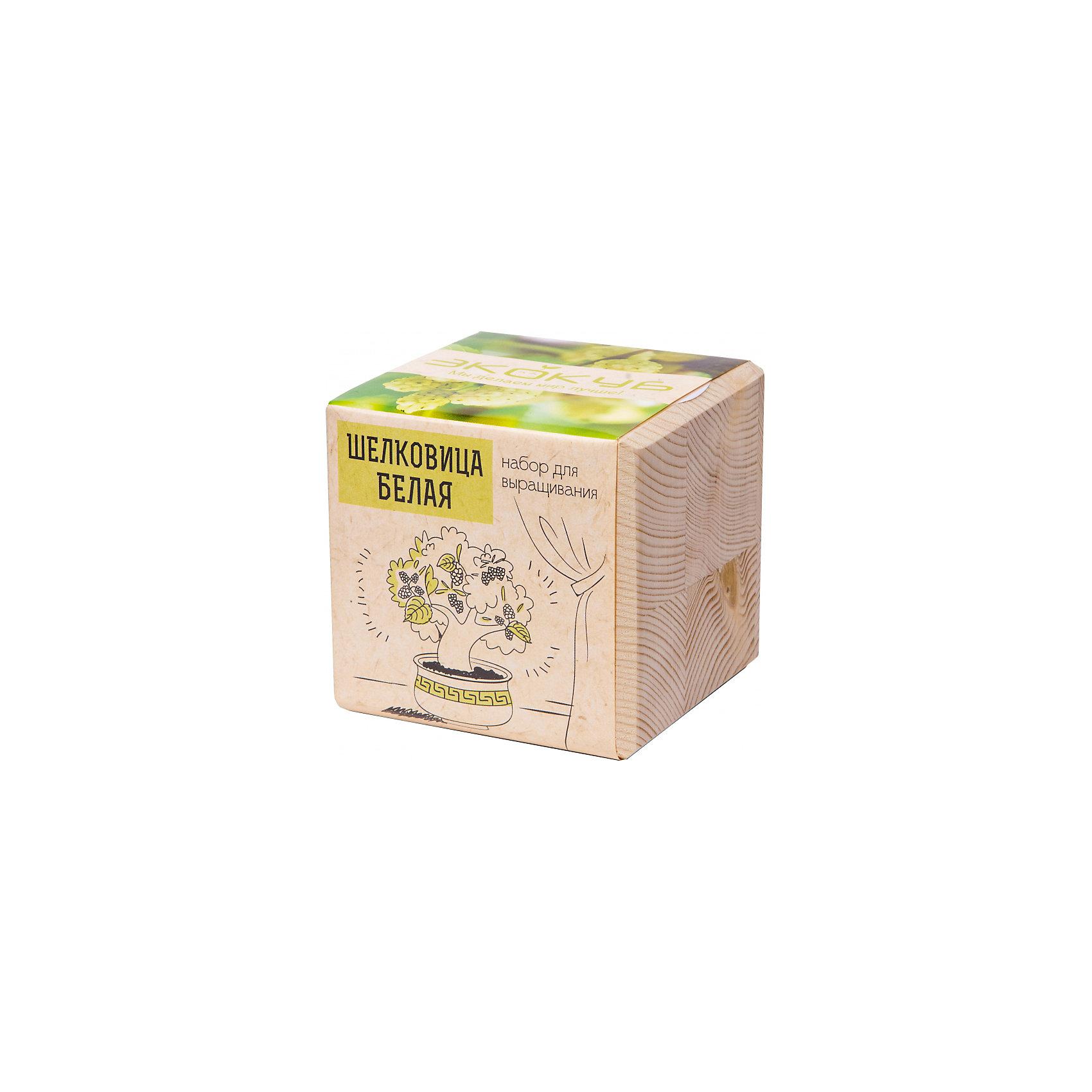 Набор для выращивания Шелковица Белая, ЭкокубНаборы для выращивания растений<br>Наборы Эко Куб - удивительная вещь, которая станет необычным украшением дома или оригинальным подарком. С виду это лишь маленьникй деревянный кубик, но внутри него спрятано настоящее деревце, которое вы самостоятельно сможете прорастить из семечка и собрать урожай. Это увлекательное и полезное занятие для всей семьи, которое поможет родителям стать ближе к своим детям. Набор учит ребенка заботиться о живых существах, воспитывает чувство ответственности.<br><br>Ширина мм: 80<br>Глубина мм: 80<br>Высота мм: 80<br>Вес г: 204<br>Возраст от месяцев: 60<br>Возраст до месяцев: 2147483647<br>Пол: Унисекс<br>Возраст: Детский<br>SKU: 5596056
