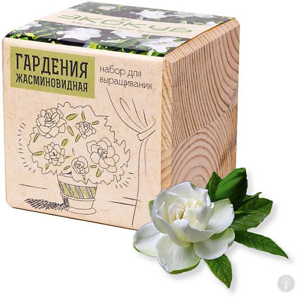 Набор для выращивания Гардения жасминовидная, ЭкокубВыращивание растений<br>Наборы Эко Куб - удивительная вещь, которая станет необычным украшением дома или оригинальным подарком. С виду это лишь маленьникй деревянный кубик, но внутри него спрятано настоящее деревце, которое вы самостоятельно сможете прорастить из семечка и собрать урожай. Это увлекательное и полезное занятие для всей семьи, которое поможет родителям стать ближе к своим детям. Набор учит ребенка заботиться о живых существах, воспитывает чувство ответственности.<br><br>Ширина мм: 80<br>Глубина мм: 80<br>Высота мм: 80<br>Вес г: 204<br>Возраст от месяцев: 60<br>Возраст до месяцев: 2147483647<br>Пол: Унисекс<br>Возраст: Детский<br>SKU: 5596057