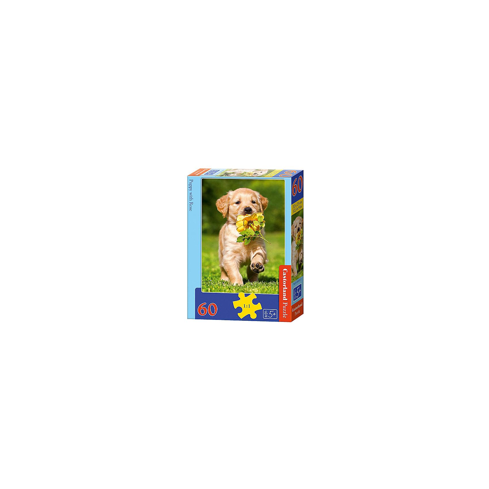 Пазл Castorland Щенок с розой, 60 деталейКлассические пазлы<br>Характеристики:<br><br>• возраст: от 5 лет<br>• количество деталей: 60 шт.<br>• размер собранного пазла: 23х32 см.<br>• материал: картон<br>• упаковка: картонная коробка<br>• размер упаковки: 13x4x18 см.<br>• вес: 150 гр.<br>• страна обладатель бренда: Польша<br><br>Пазл «Щенок с розой» от Castorland (Касторленд) отличается высоким качеством, высоким уровнем полиграфии, насыщенными цветами и идеальной стыковкой элементов. Из 60 элементов пазла ребенок соберет красочную картину с изображением милого щенка, несущего в зубах желтую розу.<br><br>Пазл Щенок с розой, 60 деталей, Castorland (Касторленд) можно купить в нашем интернет-магазине.<br><br>Ширина мм: 180<br>Глубина мм: 130<br>Высота мм: 40<br>Вес г: 150<br>Возраст от месяцев: 60<br>Возраст до месяцев: 2147483647<br>Пол: Унисекс<br>Возраст: Детский<br>SKU: 6725088