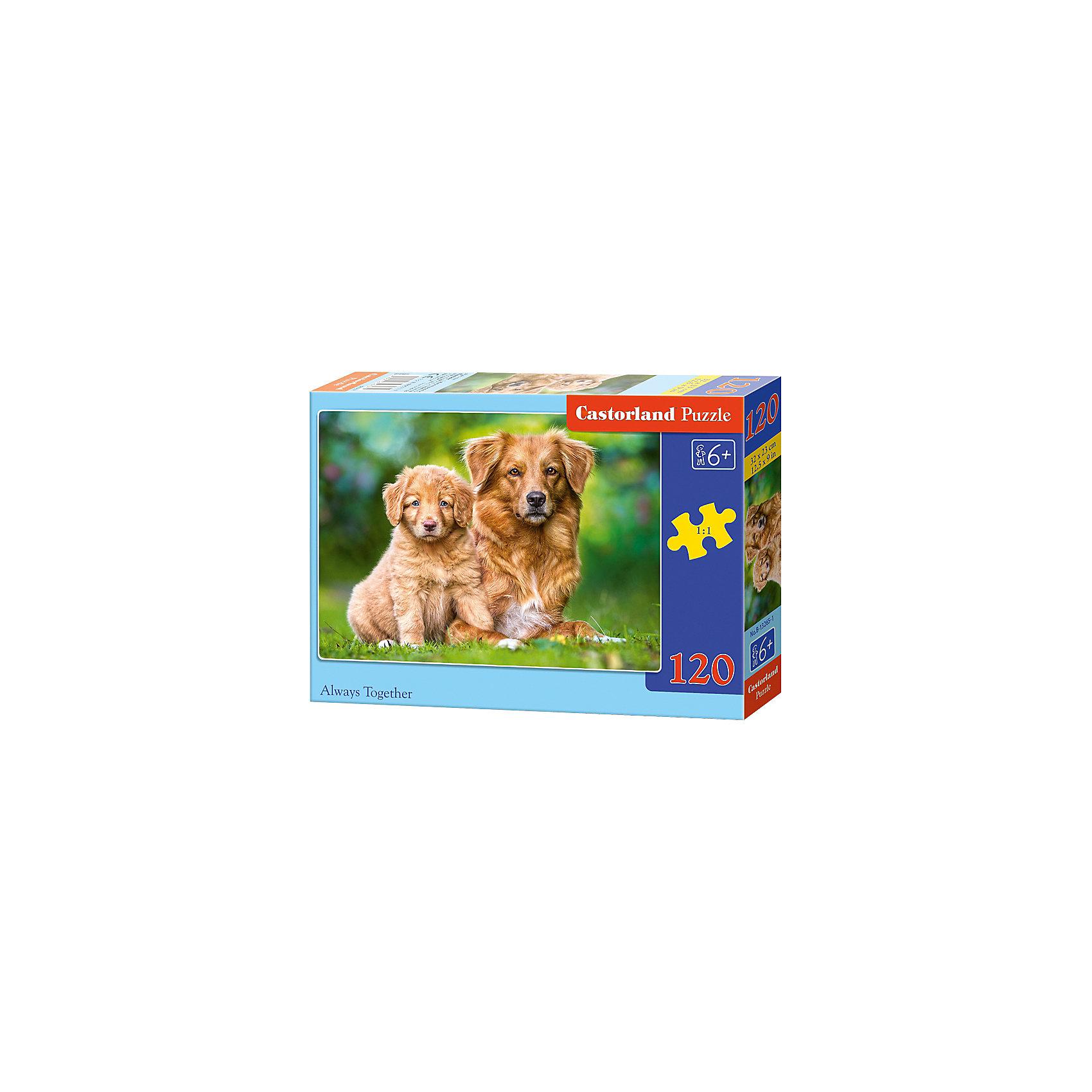 Пазл Castorland Всегда вместе, 120 деталейПазлы для детей постарше<br>Характеристики:<br><br>• возраст: от 6 лет<br>• количество деталей: 120 шт.<br>• размер собранного пазла: 32х23 см.<br>• материал: картон<br>• упаковка: картонная коробка<br>• размер упаковки: 17,5x3,7x13 см.<br>• вес: 300 гр.<br>• страна обладатель бренда: Польша<br><br>Пазл «Всегда вместе» от Castorland (Касторленд) отличается высоким качеством, высоким уровнем полиграфии, насыщенными цветами и идеальной стыковкой элементов. Из 120 элементов пазла ребенок соберет красочную картинку с изображением собаки и забавного щенка.<br><br>Пазл Всегда вместе, 120 деталей, Castorland (Касторленд) можно купить в нашем интернет-магазине.<br><br>Ширина мм: 175<br>Глубина мм: 130<br>Высота мм: 37<br>Вес г: 300<br>Возраст от месяцев: 72<br>Возраст до месяцев: 2147483647<br>Пол: Унисекс<br>Возраст: Детский<br>SKU: 6725098