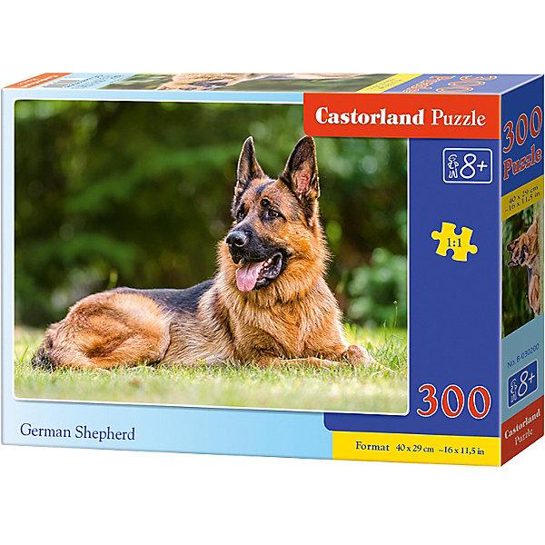 Пазл Castorland Немецкая овчарка, 300 деталейПазлы классические<br>Характеристики:<br><br>• возраст: от 8 лет<br>• количество деталей: 300 шт.<br>• размер собранного пазла: 40х29 см.<br>• материал: картон<br>• упаковка: картонная коробка<br>• размер упаковки: 32x4,7x22 см.<br>• вес: 300 гр.<br>• страна обладатель бренда: Польша<br><br>Пазл «Немецкая овчарка» от Castorland (Касторленд) отличается высоким качеством, высоким уровнем полиграфии, насыщенными цветами и идеальной стыковкой элементов. Из 300 элементов пазла ребенок соберет красивую картинку с изображением немецкой овчарки.<br><br>Пазл Немецкая овчарка, 300 деталей, Castorland (Касторленд) можно купить в нашем интернет-магазине.<br>Ширина мм: 320; Глубина мм: 220; Высота мм: 47; Вес г: 300; Возраст от месяцев: 96; Возраст до месяцев: 2147483647; Пол: Унисекс; Возраст: Детский; SKU: 6725105;