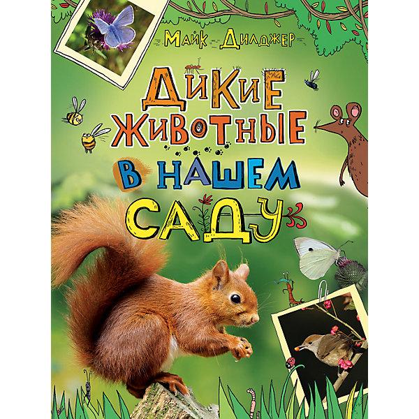 Дикие животные в нашем садуРассказы и повести<br>Дикие животные в нашем саду.<br><br>Характеристики:<br><br>• Для детей в возрасте: от 5 лет<br>• Автор: Майк Дилджер<br>• Переводчик: В. А. Гришечкин<br>• Издательство: Росмэн<br>• Тип обложки: 7Бц - твердая, целлофанированная (или лакированная)<br>• Иллюстрации: цветные<br>• Количество страниц: 160<br>• Размер: 285х220х13 мм.<br>• Вес: 765 гр.<br>• ISBN: 9785353081746<br><br>Сад, огород или парк, где вы часто бываете, - убежище для разной живности, о существовании которой вы даже не подозреваете! Там находят приют и пропитание жуки, бабочки, стрекозы, многоножки, лягушки, сойки, пеночки, ежи, белки и много кто еще! Книга натуралиста и телеведущего научно-популярных программ Би-би-си Майка Дилджера познакомит читателей с животными, которые окружают нас повсюду. Из нее вы узнаете немало интересных фактов о насекомых, птицах и зверях, обитающих не только в лесу, но и на загородном участке, и научитесь их распознавать.<br><br>Книгу «Дикие животные в нашем саду» можно купить в нашем интернет-магазине.<br><br>Ширина мм: 220<br>Глубина мм: 130<br>Высота мм: 285<br>Вес г: 765<br>Возраст от месяцев: 60<br>Возраст до месяцев: 2147483647<br>Пол: Унисекс<br>Возраст: Детский<br>SKU: 6758925