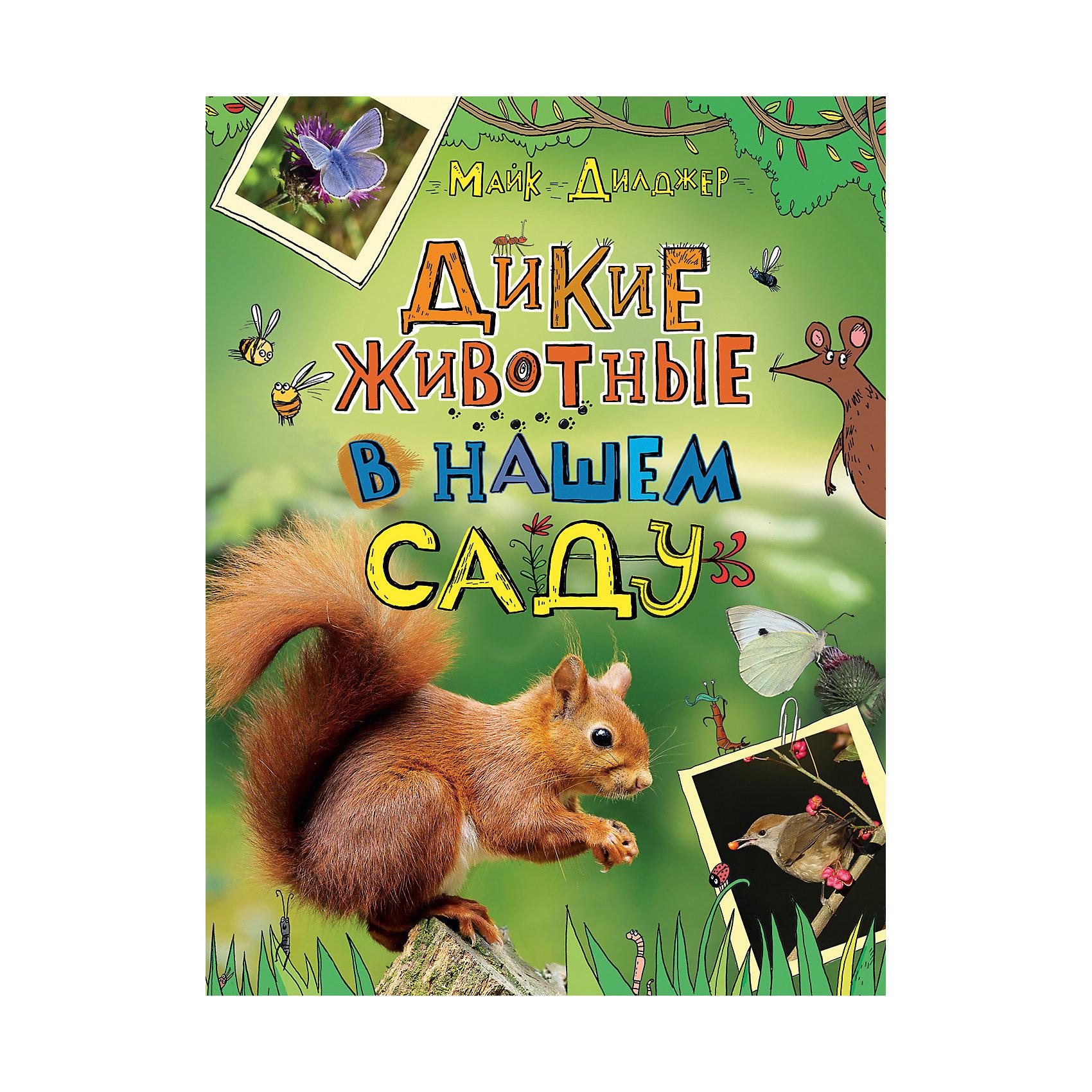 Дикие животные в нашем садуРассказы и повести<br>Сад, огород или парк, где вы часто бываете, - убежище для разной живности, о существовании которой вы даже не подозреваете! Там находят приют и пропитание жуки, бабочки, стрекозы, многоножки, лягушки, сойки, пеночки, ежи, белки и много кто еще! Книга натуралиста и телеведущего научно-популярных программ Би-би-си Майка Дилджера познакомит читателей с животными, которые окружают нас повсюду. Из нее вы узнаете немало интересных фактов о насекомых, птицах и зверях, обитающих не только в лесу, но и на загородном участке, и научитесь их распознавать.<br><br>Ширина мм: 220<br>Глубина мм: 130<br>Высота мм: 285<br>Вес г: 765<br>Возраст от месяцев: 60<br>Возраст до месяцев: 2147483647<br>Пол: Унисекс<br>Возраст: Детский<br>SKU: 6758925