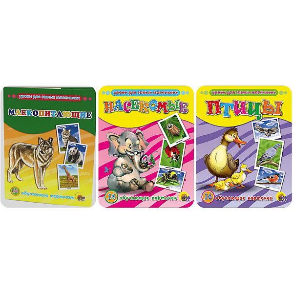 Комплект из 3 наборов карточек Птицы, Млекопитающие, НасекомыеОбучающие карточки<br>Обучающие карточки серии «Уроки для самых маленьких» помогут ребёнку узнать много интересного об окружающем мире, его богатстве и многообразии. Каждый набор включает 16 карточек и посвящён определённой тематике. Благодаря данному набору ребёнок в познавательной и в то же время игровой форме узнает, как безопасно вести себя дома и на улице, как правильно поступать в той или иной ситуации, а также познакомится с телефонными номерами экстренных служб. Работа с карточками станет для малыша не только увлекательным занятием, но и начальным этапом подготовки к дальнейшему обучению в школе.<br><br>Ширина мм: 170<br>Глубина мм: 220<br>Высота мм: 18<br>Вес г: 491<br>Возраст от месяцев: 12<br>Возраст до месяцев: 36<br>Пол: Унисекс<br>Возраст: Детский<br>SKU: 6990130