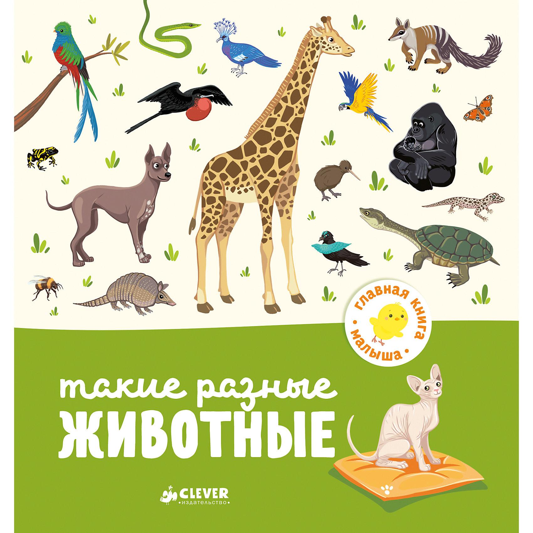 Такие разные животные, А. Бессон, Главная книга малышаОкружающий мир<br>Характеристики товара:<br><br>• ISBN: 978-5-00115-007-7;<br>• возраст: от 1 года;<br>• формат: 70х90/16;<br>• бумага: мелованная;<br>• тип обложки: 7Бц - твердая, целлофанированная (или лакированная);<br>• иллюстрации: цветные;<br>• серия: Главная книга малыша;<br>• издательство: Клевер Медиа Групп, 2017 г.;<br>• автор: Бессон Агнес;<br>• редактор: Видревич Ирина;<br>• переводчик: Маслиева Елизавета;<br>• художник: Сюрэн;<br>• количество страниц: 24;<br>• размеры: 18,6х17,5х0,8 см;<br>• масса: 208 г.<br><br>Книга с красочными крупными иллюстрациями и простым текстом подойдет для самых маленьких. <br><br>Интересные задания познакомят ребенка с окружающим миром. На каждом развороте расположены необычные животные саванны. Веселые задачки «Найди и покажи» развивают внимание, логику и мышление.<br><br>Книгу «Такие разные животные», А. Бессон, Клевер Медиа Групп, можно купить в нашем интернет-магазине.<br><br>Ширина мм: 180<br>Глубина мм: 170<br>Высота мм: 8<br>Вес г: 200<br>Возраст от месяцев: 12<br>Возраст до месяцев: 36<br>Пол: Унисекс<br>Возраст: Детский<br>SKU: 7039975