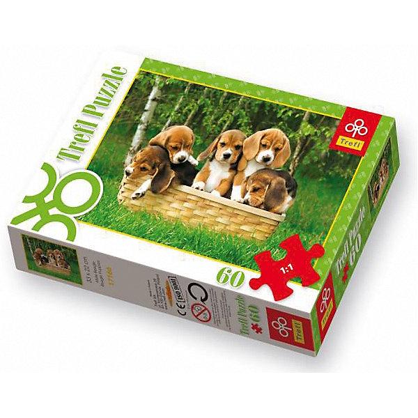 60 дет. - Маленькие биглиПазлы для малышей<br>Характеристики товара:<br><br>• количество деталей: 60 шт.;<br>• размер картинки: 33х22 см;<br>• возраст: от 3 лет;<br>,• материал: картон;<br>• размер упаковки: 21х4х14 см;<br>• страна бренда: Польша;<br>• страна производитель: Польша.<br><br>Пазлы «Маленькие бигли» - прекрасный подарок для всех любителей животных. На картинке изображены милые вислоухие щенята, отдыхающие в корзине. Такая картинка отлично украсит любую комнату в доме. Паз состоит из 60 элементов, изготовленных из каландрированной бумаги с антибликовым покрытием. Пазлы легко стыкуются между собой и не отсвечивают даже при направленном свете. Сборка пазлов отлично развивает моторику рук, логику, пространственное мышление, внимательность и память.<br><br>60 дет. - Маленькие бигли, Trefl (Трефл) можно купить в нашем интернет-магазине.<br><br>Ширина мм: 143<br>Глубина мм: 213<br>Высота мм: 40<br>Вес г: 200<br>Возраст от месяцев: 36<br>Возраст до месяцев: 120<br>Пол: Унисекс<br>Возраст: Детский<br>SKU: 7126411