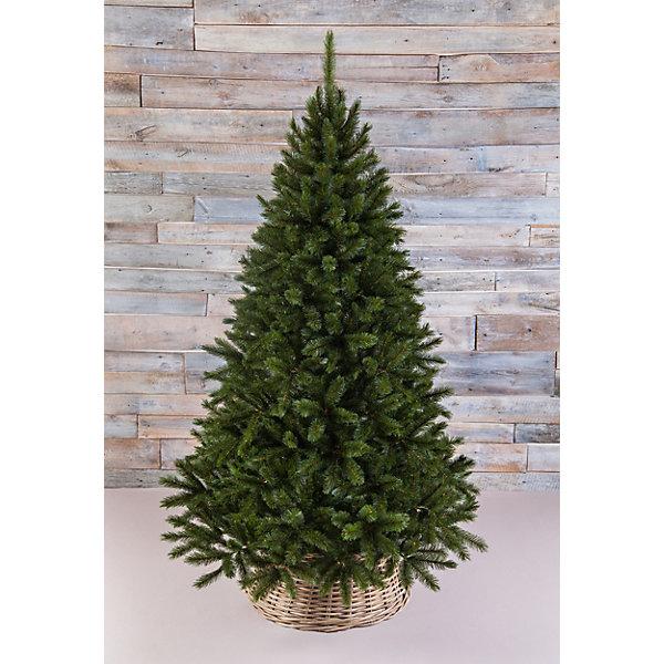Искусственная елка Triumph Tree Пихта прелестная, 155 см (зеленая)Искусственные ёлки<br>Характеристики товара: <br><br>• высота: 155 см.;<br>• размещение: напольное; <br>• конструкция: разборная;<br>• вид елки: пихта;<br>• размер коробки: 79x31x29 см.;<br>• вес: 7,5 кг.;<br>• вид подставки: тренога;<br>• количество веток: 438 шт.;<br>• материал: ПВХ;<br>• изготовитЕль: Тайланд.<br><br>Искусственная пихта Triumph Tree «Прелестная», выполненная из ПВХ, станет прекрасным вариантом для оформления вашего интерьера к Новому году. Такая пихта абсолютно безопасна для самых непоседливых малышей, удобна в сборке и не занимает много места при хранении. Она быстро и легко устанавливается и имеет естественный и абсолютно натуральный вид. <br>Иголочки не осыпаются, не мнутся и не выцветают со временем. <br><br>Полимерные материалы, из которых они изготовлены, не токсичны и не поддаются горению. Пихта Triumph Tree «Прелестная» обязатЕльно создаст настроение волшебства и уюта, а так же станет прекрасным украшением дома на период новогодних праздников. <br><br>Искуственную пихту Triumph Tree «Прелестная» можно купить в нашем интернет-магазине.<br><br>Ширина мм: 790<br>Глубина мм: 310<br>Высота мм: 290<br>Вес г: 7500<br>Возраст от месяцев: 36<br>Возраст до месяцев: 2147483647<br>Пол: Унисекс<br>Возраст: Детский<br>SKU: 7143034