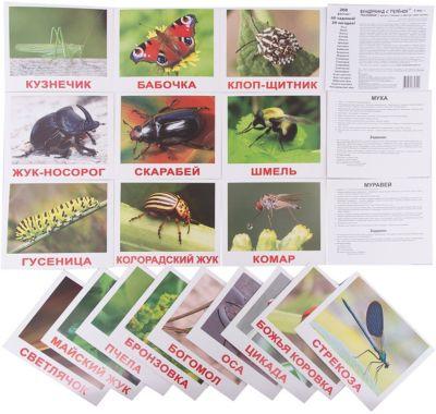 Набор обучающих карточек Вундеркинд с пелёнок Насекомые 20 штук