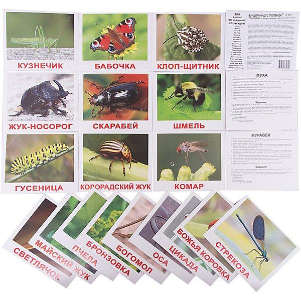 Набор обучающих карточек Вундеркинд с пелёнок Насекомые 20 штукОбучающие карточки<br>20 карточек с фотографиями насекомых на цветном фоне, на качественном картоне. <br>Внимание!!! На обратной стороне каждой карточки напечатано:<br>10 занимательных фактов;<br>2 задания для ребенка;<br>1 загадка<br>В набор вошли: оса, муха, комар, шмель, пчела, стрекоза, бабочка, кузнечик, муравей, божья коровка, цикада, богомол, гусеница, майский жук, светлячок, жук-носорог, скарабей, сороконожка, клоп-щитник, бронзовка.<br><br>Ширина мм: 195<br>Глубина мм: 165<br>Высота мм: 10<br>Вес г: 190<br>Возраст от месяцев: 3<br>Возраст до месяцев: 36<br>Пол: Унисекс<br>Возраст: Детский<br>SKU: 7182298