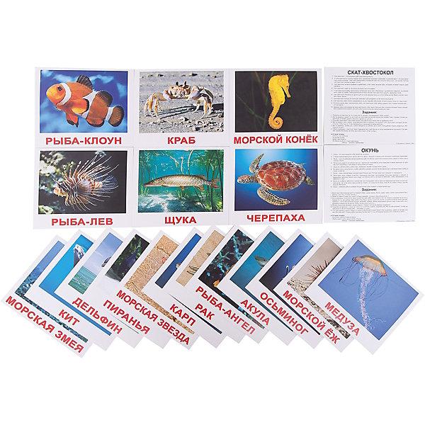 Набор обучающих карточек Вундеркинд с пелёнок Обитатели воды 20 штукОбучающие карточки<br>Характеристики:<br><br>• ISBN: 4612731630348;<br>• бренд: Вундеркинд с пеленок;<br>• вес: 190 гр;<br>• размер: 19,5x16,5x1 см;<br>• возраст: от 3 лет;<br>• количество карточек: 20 шт.<br><br>Комплект карточек «Обитатели воды» - это набор из двадцати карточек с самыми известными водными обитателями. Все животные изображены на цветном фоне. Карточки сделаны из качественного картона.<br>На обороте карточек имеется дополнительная информация. На десяти карточках занимательные факты о мире обитателей воды, шесть заданий и логическая загадка для ребенка.<br><br>В наборе карточек акула, дельфин, кит, морской конёк, рыба-клоун, рыба-лев, морская змея, медуза, краб, рак, осьминог, морская звезда, скат-хвостокол, рыба-ангел, черепаха, морской ёж, карп, щука, окунь и пиранья.<br>Комплект карточек «Обитатели воды» можно купить в нашем интернет-магазине.<br><br>Ширина мм: 195<br>Глубина мм: 165<br>Высота мм: 10<br>Вес г: 190<br>Возраст от месяцев: 3<br>Возраст до месяцев: 36<br>Пол: Унисекс<br>Возраст: Детский<br>SKU: 7182299
