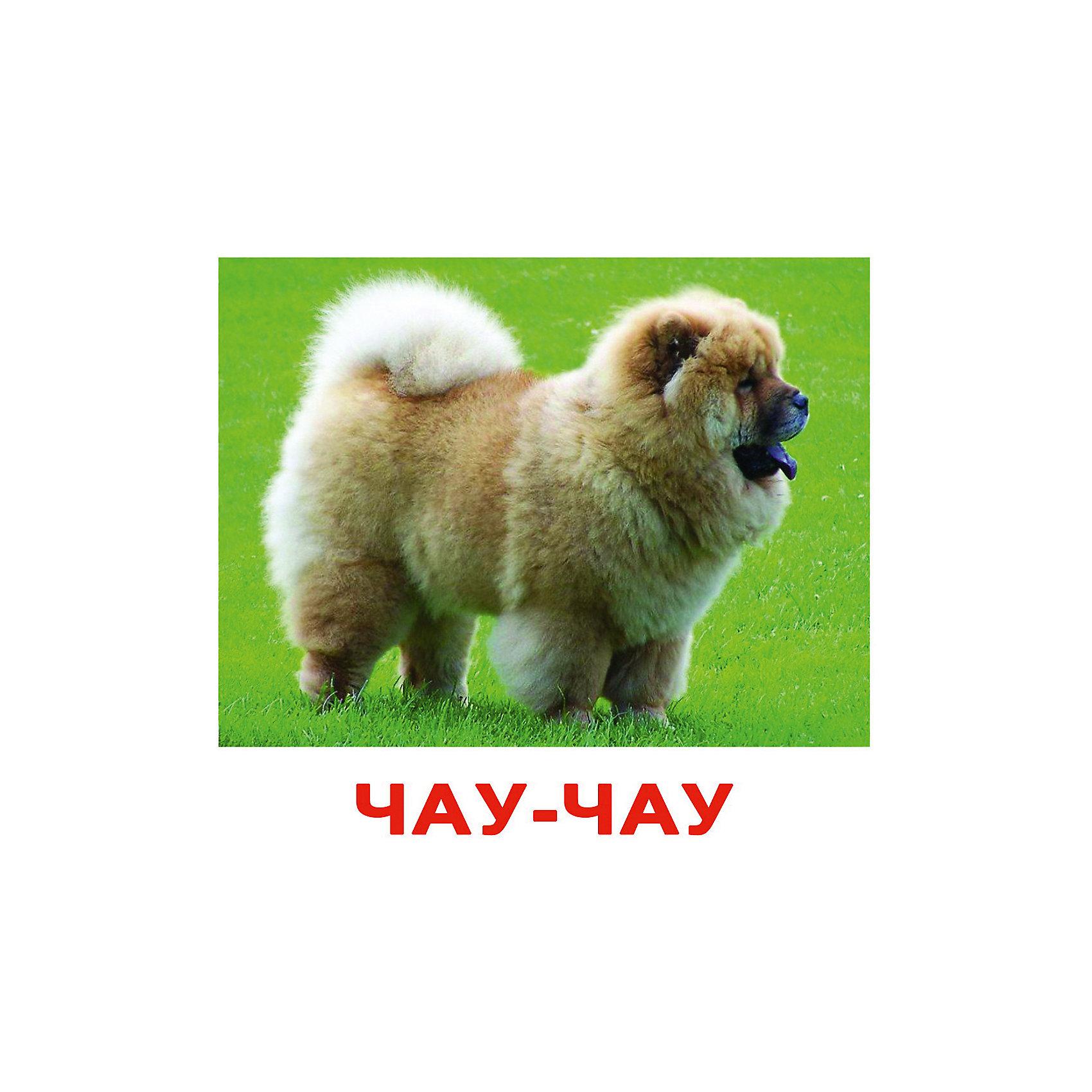 Набор открыток породы собак 95
