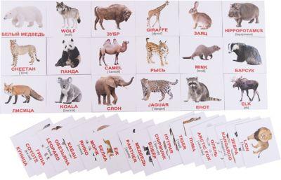 Набор обучающих мини-карточек Вундеркинд с пелёнок Wild animals/Дикие животные , двухсторонний 40 штук