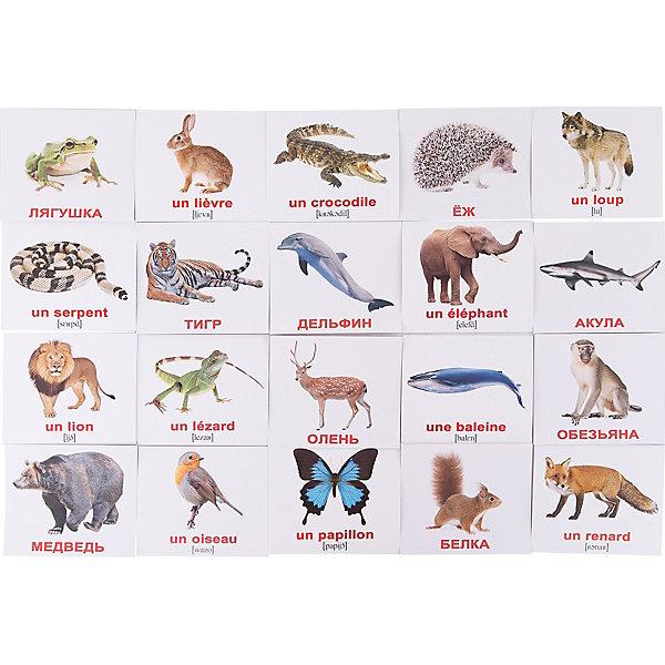 Набор обучающих мини-карточек Вундеркинд с пелёнок Les animaix sauvages/Дикие животные, двухсторонний 20 штукОбучающие карточки<br>Характеристики:<br><br>• ISBN: 4612731631611;<br>• бренд: Вундеркинд с пеленок;<br>• вес: 50 гр;<br>• материал: картон;<br>• размер: 10x8,5x5 см;<br>• возраст: от 1 года;<br>• количество карточек: 20 шт.<br><br>Комплект карточек «Мини-20 французские карточки Les animaix sauvages/Дикие животные» представляет из себя двухсторонний набор с подписями на русском и французском языках с транскрипцией. Такие занятия помогут ребенку ознакомиться с иностранным языком и выучить новые слова. <br><br>Поучительные карточки развивают память, внимание, усидчивость и другие полезные навыки. Набор подходит для детей от 1 года. Благодаря этим карточкам у  ребенка происходит развитие различных отделов головного мозга, формируется фотографическая память, он развивается гораздо быстрее сверстников. Кроме того, малыш с раннего детства изучает иностранные языки.<br><br>В набор входят слова: 1. Лев - un Lion 2. Волк - un Loup 3. Тигр - un Tigre 4. Олень - un Cerf 5. Ёж - un H?risson 6. Заяц - un Li?vre 7. Медведь - un Ours 8. Птица - un Oiseau 9. Акула - un Requin 10. Кит - une Baleine 11. Змея - un Serpent 12. Лисица - un Renard 13. Слон - un El?phant 14. Белка - un Ecureuil 15. Обезьяна - un Singe 16. Ящерица - un L?zard 17. Дельфин - un Dauphin 18. Бабочка - un Papillon 19. Крокодил - un Crocodile 20. Лягушка - une Grenouille. С одной стороны написаны слова на французском, а с другой стороны есть перевод. Также написана понятная транскрипция. <br><br> Комплект карточек «Мини-20 французские карточки Les animaix sauvages/Дикие животные» можно купить в нашем интернет-магазине.<br>Ширина мм: 100; Глубина мм: 85; Высота мм: 5; Вес г: 50; Возраст от месяцев: 12; Возраст до месяцев: 60; Пол: Унисекс; Возраст: Детский; SKU: 7182370;