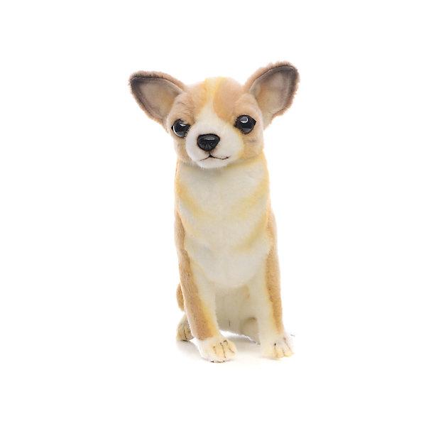 Мягкая игрушка Hansa Собака породы Чихуахуа, 31 смМягкие игрушки животные<br>Характеристики товара:<br><br>• возраст: от 3 лет;<br>• материал: искусственный мех;<br>• размер игрушки: 31 см;<br>• размер упаковки: 31х23х16 см;<br>• вес упаковки: 130 гр.;<br>• страна производитель: Филиппины.<br><br>Мягкая игрушка «Собака Чихуахуа» Hansa станет для ребенка настоящим плюшевым другом. У собачки мягкая шерстка, добрые глазки, маленькие ушки торчком. Игрушка выполнена из качественного искусственного меха, безопасного для детей. Мех настолько мягкий и приятный, что игрушку можно брать с собой в кроватку и спать в обнимку.<br><br>Игрушки Hansa точно повторяют настоящее животное, изготовлены из искусственного меха, шьются и набиваются вручную.<br><br>Мягкую игрушку «Собака Чихуахуа» Hansa можно приобрести в нашем интернет-магазине.<br>Ширина мм: 310; Глубина мм: 160; Высота мм: 230; Вес г: 130; Возраст от месяцев: 36; Возраст до месяцев: 2147483647; Пол: Унисекс; Возраст: Детский; SKU: 7199065;