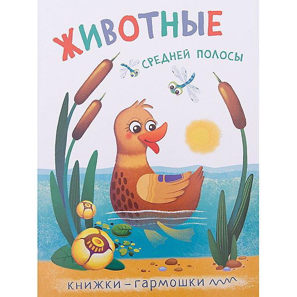 Книжки-гармошки. Животные средней полосыПервые книги малыша<br>Какие животные обитают в средней полосе? На вопросы маленького исследователя ответит яркая книга «Животные средней полосы» серии «Книжки-гармошки». <br>Красочная книжка-игрушка предназначена для развития мышления и речи у детей в возрасте от 1 года. Она обязательно заинтересует малыша и принесет ему радость благодаря необычной форме и красочному оформлению. Рассматривая крупные картинки и слушая веселые двустишия, ребенок познакомится с енотом, лисой, цаплей и другими животными, легко запомнит их названия. <br>Книжка-гармошка имеет удобный формат – ее легко держать в маленьких детских ручках, а еще всегда можно взять в поездку или в гости, украсить с ее помощью детскую комнату или учебный уголок.<br><br>Ширина мм: 4<br>Глубина мм: 164<br>Высота мм: 222<br>Вес г: 5<br>Возраст от месяцев: 12<br>Возраст до месяцев: 36<br>Пол: Унисекс<br>Возраст: Детский<br>SKU: 7340182