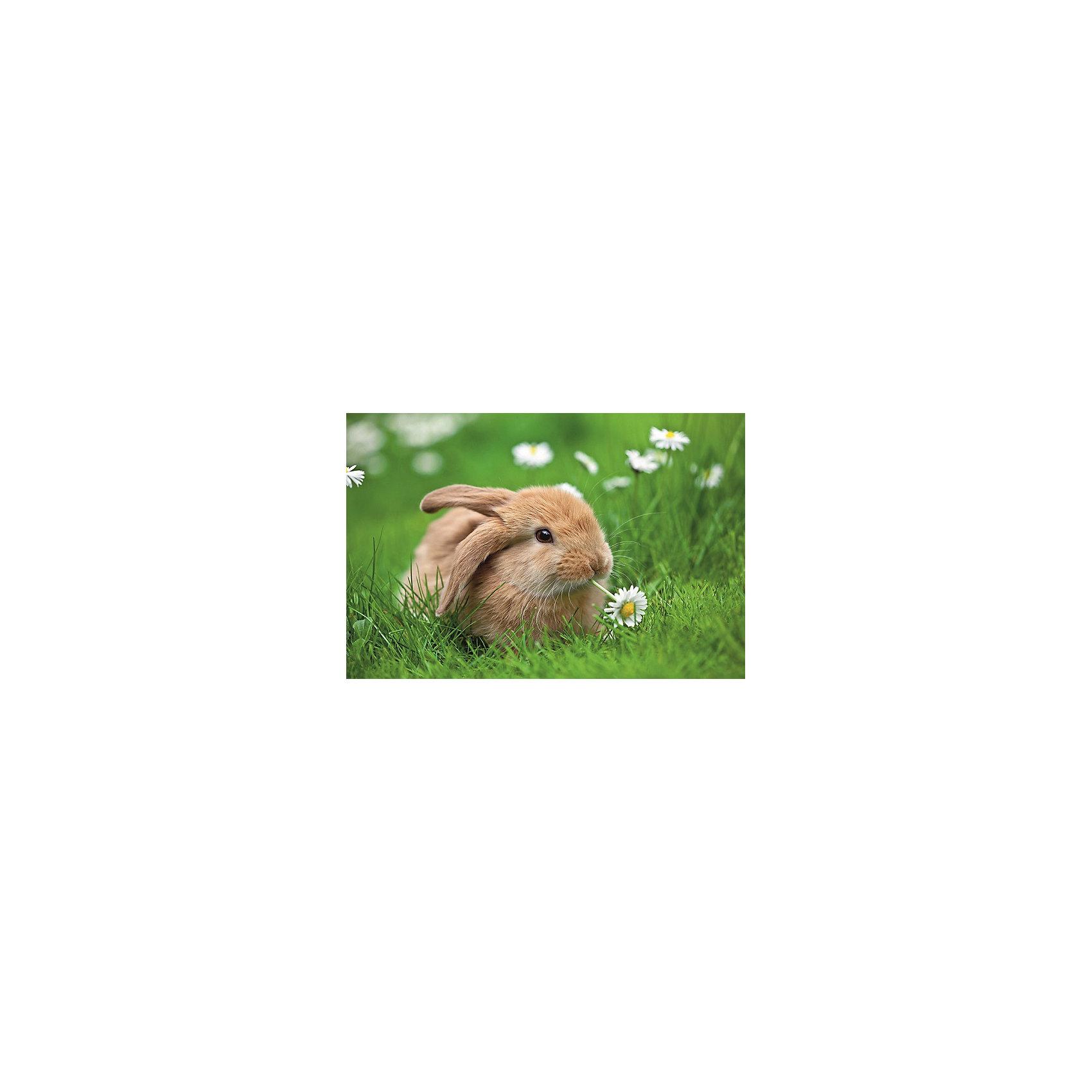Пазл «Кролик в ромашках» XXL 150 шт # от myToys