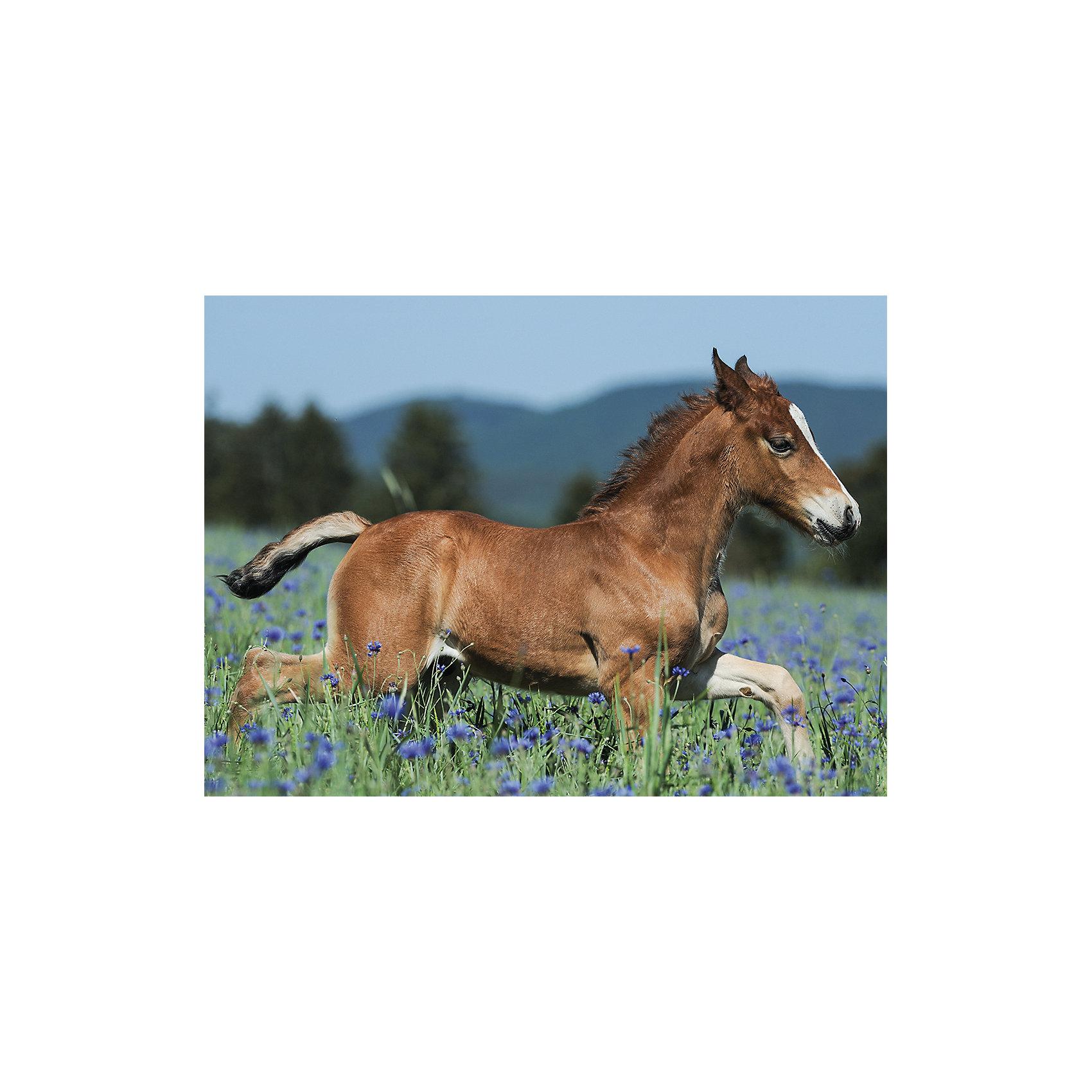 Пазл «Молодая лошадь» XXL 150 шт от myToys