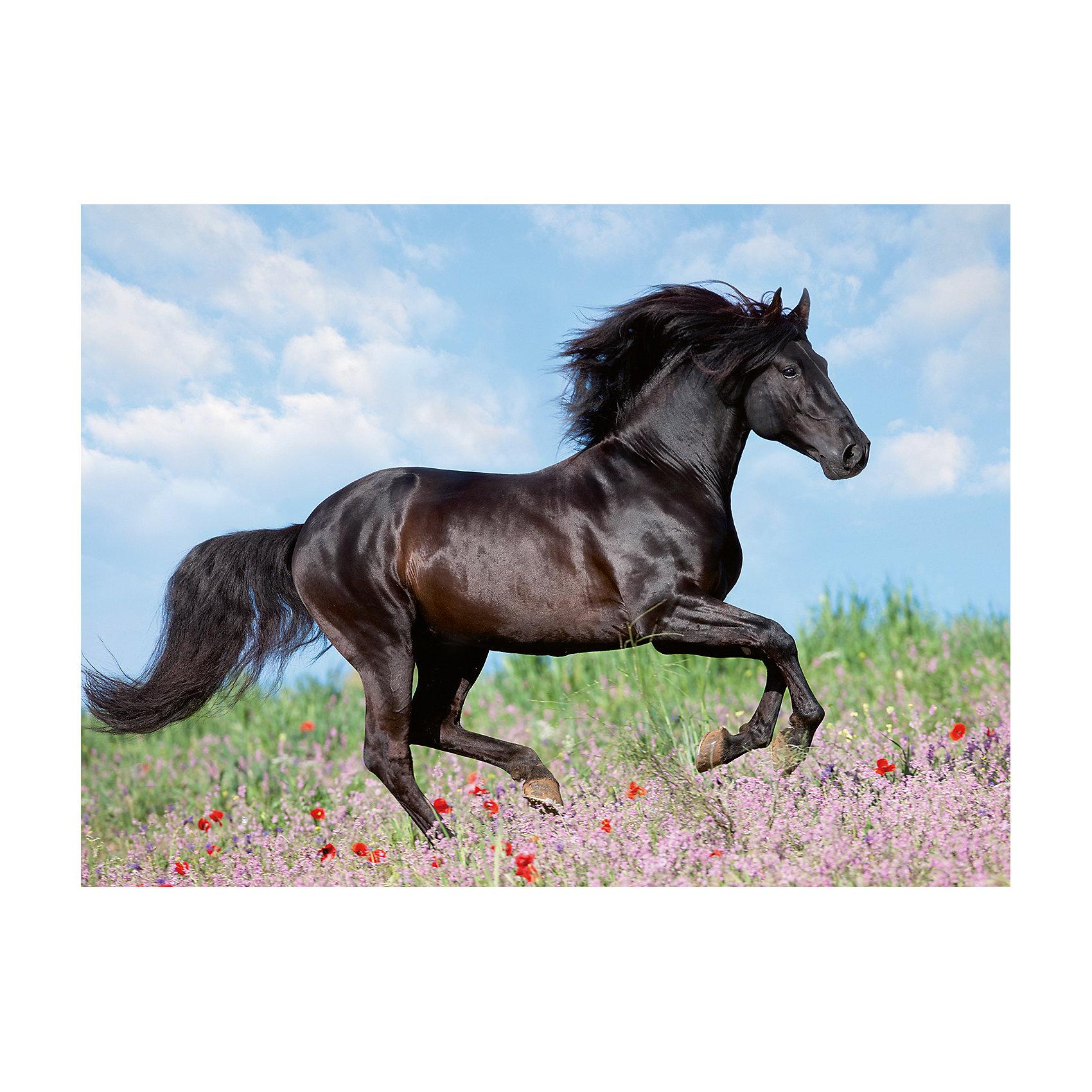 Пазл «Прекрасная лошадь» XXL 200 шт от myToys