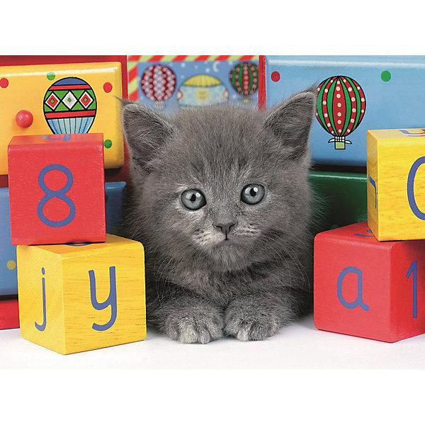 Пазл светящийся «Котенок с кубиками» XXL 200 штПазлы до 200 деталей<br>Характеристики:<br><br>• тип игрушки: пазл;<br>• комплектация: 200 эл;<br>• размер картинки: 49х36 см;<br>• бренд: Ravensburger;<br>• упаковка: картон;<br>• размер: 34х4х23 см;<br>• вес: 571 гр;<br>• возраст: от 6 лет;<br>• материал: картон.<br><br>Пазл светящийся «Котенок с кубиками» XXL 200 шт представляет из себя увлекательную игру для детей от шести лет. Набор состоит из 200 деталей, выполненных из высококачественного картона. Из них предлагается собрать изображение маленького серого котенка, который сидит в окружении цветных детских кубиков. Кроме того, собранный пазл светится в темноте мягким приятным светом. <br><br>Головоломки Ravensburger всегда отличаются высоким качеством полиграфии, изготовлены из экологичного сырья. Рисунок имеет матовую поверхность без бликов, напечатан на ламинированной бумаге. Пазл сделан из плотного картона, с нанесением красочного рисунка и аккуратной вырубкой деталей с четкими гладкими краями, которые позволяют легко состыковывать элементы пазла между собой. <br><br>Сборка данного пазла сможет увлечь детей и поспособствовать развитию логического мышления и усидчивости.  Они также развивают образное мышление, наблюдательность и внимательность, а также мелкую моторику и координацию движений рук.<br><br>Пазл светящийся «Котенок с кубиками» XXL 200 шт можно купить в нашем интернет-магазине.<br>Ширина мм: 340; Глубина мм: 40; Высота мм: 230; Вес г: 571; Возраст от месяцев: -2147483648; Возраст до месяцев: 2147483647; Пол: Унисекс; Возраст: Детский; SKU: 7376944;