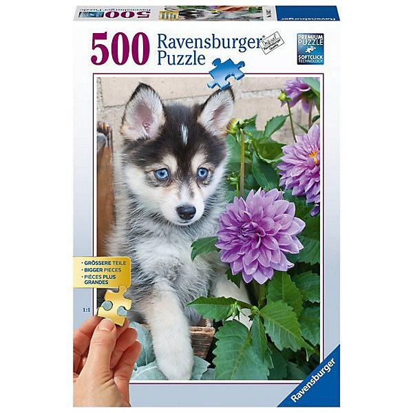 Пазл «Маленький хаски» 500 штПазлы классические<br>Характеристики:<br><br>• тип игрушки: пазл;<br>• комплектация: 500 эл;<br>• бренд: Ravensburger;<br>• упаковка: картон;<br>• размер: 34х4х23 см;<br>• размер картинки: 61х46 см;<br>• вес: 751 гр;<br>• возраст: от 6 лет;<br>• материал: картон.<br><br>Пазл «Маленький хаски» 500 элементов представляет из себя увлекательную игру для детей от шести лет. Набор состоит из 500 деталей, выполненных из высококачественного картона. Из них предлагается собрать изображение маленького щенка породы хаски. У него ярко-голубые глаза и очень добрый взгляд. Такой щенок станет настоящим украшением дома и будет повышать настроение при одном взгляде на него.     <br>Головоломки Ravensburger всегда отличаются высоким качеством полиграфии, изготовлены из экологичного сырья. Собранный пазл будет иметь матовую поверхность без бликов, потому как напечатан на качественной ламинированной бумаге. Пазл сделан из плотного картона, с нанесением красочного рисунка и аккуратной вырубкой деталей с четкими гладкими краями, которые позволяют легко состыковывать элементы пазла между собой. Сборка данного пазла сможет увлечь детей и поспособствовать развитию логического мышления и усидчивости.  Они также развивают образное мышление, наблюдательность и внимательность, а также мелкую моторику и координацию движений рук.<br>Пазл «Маленький хаски» 500 элементов можно купить в нашем интернет-магазине.<br><br>Ширина мм: 340<br>Глубина мм: 40<br>Высота мм: 230<br>Вес г: 751<br>Возраст от месяцев: -2147483648<br>Возраст до месяцев: 2147483647<br>Пол: Унисекс<br>Возраст: Детский<br>SKU: 7376971