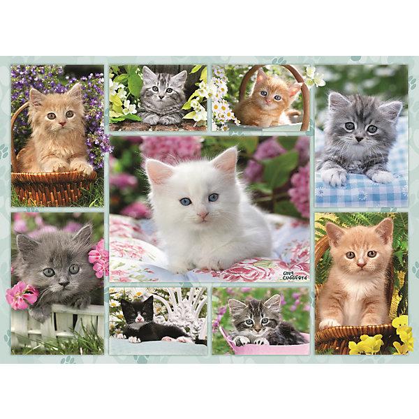 Пазл «Галерея котят» 500 штПазлы до 500 деталей<br>Характеристики:<br><br>• тип игрушки: пазл;<br>• комплектация: 500 эл.;<br>• бренд: Ravensburger;<br>• упаковка: картон;<br>• размер: 34х4х23 см;<br>• вес: 579 гр;<br>• возраст: от 4 лет;<br>• материал: картон.<br><br>Пазл «Галерея котят» 500 шт представляет из себя увлекательную игру для детей от четырех лет. Набор состоит из 500 деталей, выполненных из высококачественного картона. Из них предлагается собрать изображение разных котят.<br><br>Пазл сделан из плотного картона, с нанесением яркого красочного рисунка и аккуратной вырубкой деталей с четкими гладкими краями, которые позволяют легко состыковывать элементы пазла между собой. Сборка данного пазла сможет увлечь детей и поспособствовать развитию логического мышления и усидчивости.  Они также развивают образное мышление, наблюдательность и внимательность, а также мелкую моторику и координацию движений рук.<br><br>Пазл «Галерея котят» 500 шт можно купить в нашем интернет-магазине.<br>Ширина мм: 340; Глубина мм: 40; Высота мм: 230; Вес г: 579; Возраст от месяцев: -2147483648; Возраст до месяцев: 2147483647; Пол: Унисекс; Возраст: Детский; SKU: 7376977;