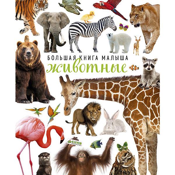 Большая книга малыша ЖивотныеЭнциклопедии для малышей<br>Характеристики товара:<br><br>• ISBN:9785001152736;<br>• возраст: от 3 лет;<br>• иллюстрации: цветные;<br>• обложка: твердая;<br>• количество страниц: 24;<br>• формат: 30х24,5х2 см.;<br>• вес: 440 гр.;<br>• издательство:  Клевер Медиа Групп;<br>• страна: Россия.<br><br>«Большая книга малыша. Животные» откроет каждому юному читателю удивительный и прекрасный мир фауны. Книга содержит большое количество ярких картинок и пояснительных заметок, благодаря которым каждый ребенок сможет увидеть животных всего мира и узнать их места обитания. Читая заметки, ребятишки смогут познать много новой и интересной информации.<br><br>Яркие фотографии и крупные буквы - идеально для самых маленьких. На каждом развороте - фотографии животных, насекомых, морских обитателей и домашних любимцев. А рядом - короткие вопросы и задания, которые помогут сделать знакомство с окружающим миром интересным и полезным.<br><br>Данное красочное издание очень познавательный подарок для развития логического мышления и памяти, увеличения словарного запаса и других полезных навыков.<br><br> «Большая книга малыша. Животные», 24 стр., изд. Клевер Медиа Групп, можно купить в нашем интернет-магазине.<br>Ширина мм: 300; Глубина мм: 245; Высота мм: 20; Вес г: 438; Возраст от месяцев: 0; Возраст до месяцев: 36; Пол: Унисекс; Возраст: Детский; SKU: 7434298;